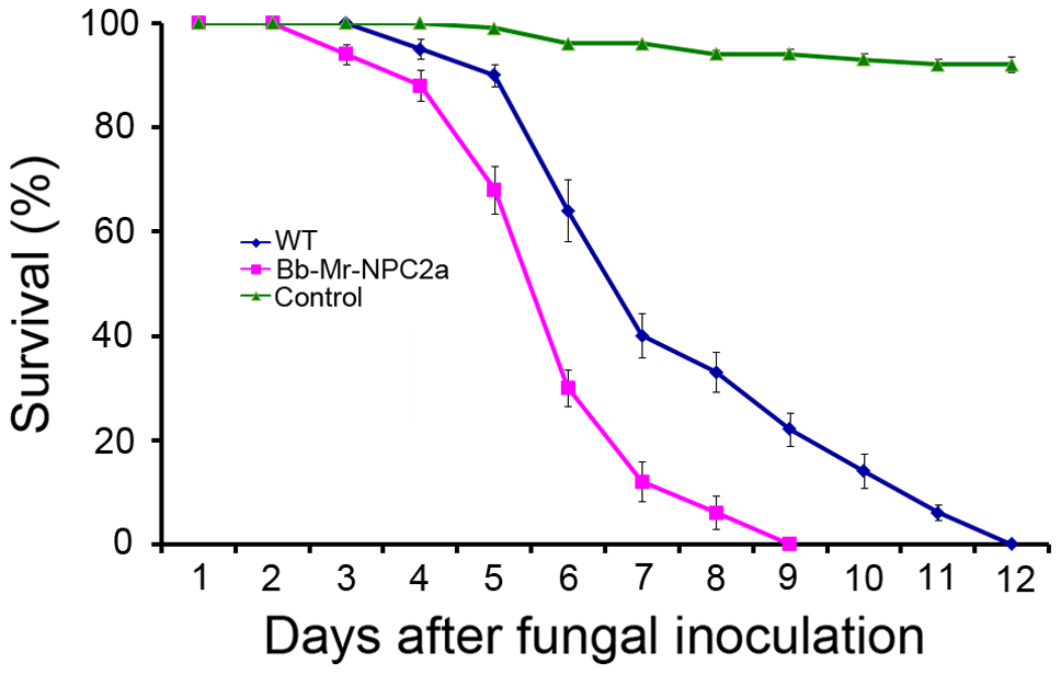 Kinetics of insect survivorship in bioassays with <i>B. bassiana</i>.