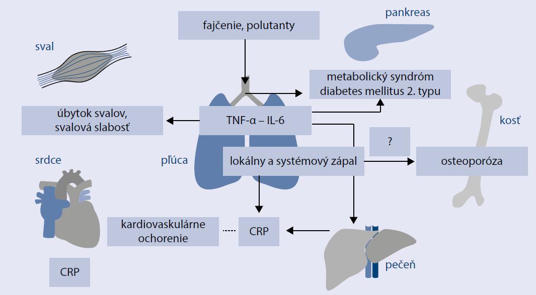 Schéma 2. Mechanizmus vzniku chronického systémového zápalového procesu. Upravené podľa [8]