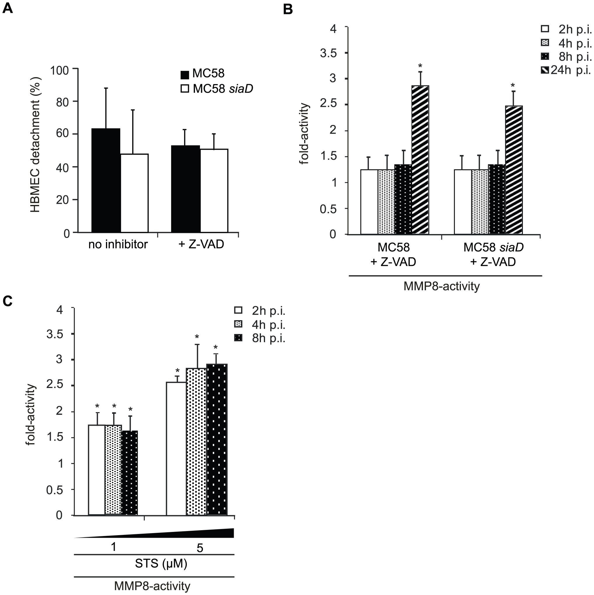 <i>N. meningitidis</i> infection triggers caspase-independent detachment of HBMEC.