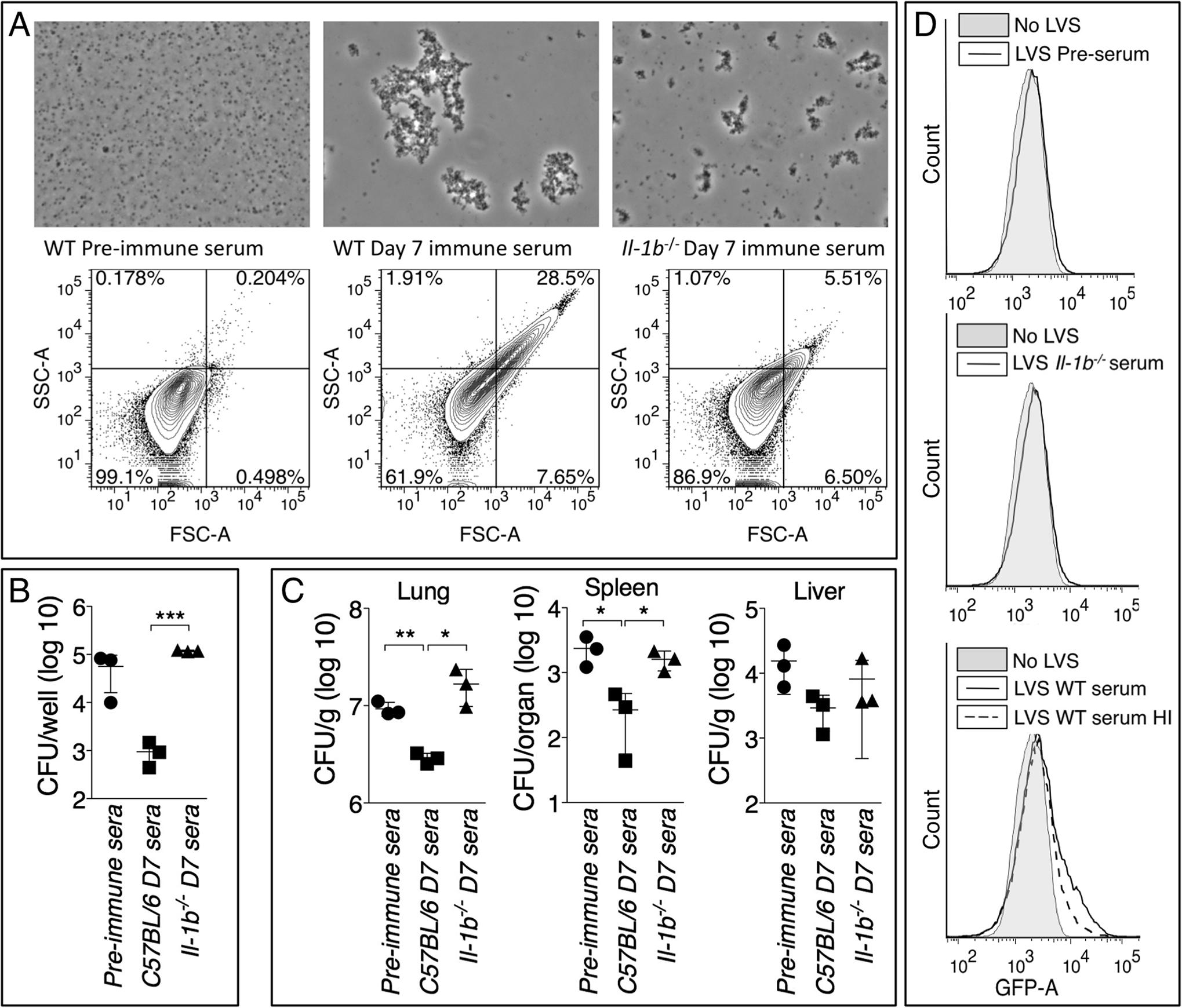 Anti-Ft IgM efficiently agglutinates <i>Ft</i> and promotes phagocytosis.