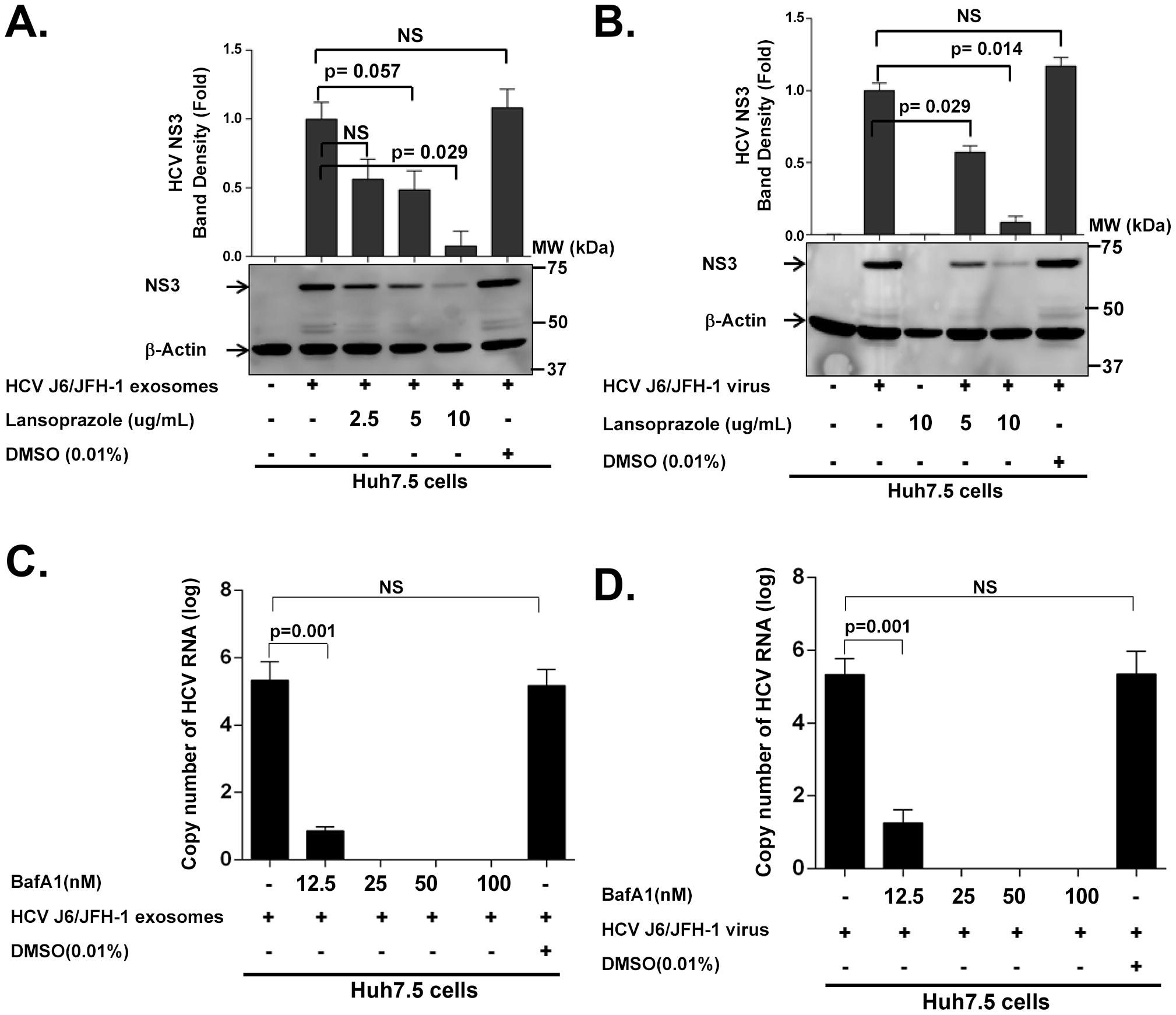 HCV transmission by exosomes and free virus can be blocked by proton pump inhibitor (Lansoprazole) and Vacuolar-type H+-ATPase inhibitor (bafilomycin A1).
