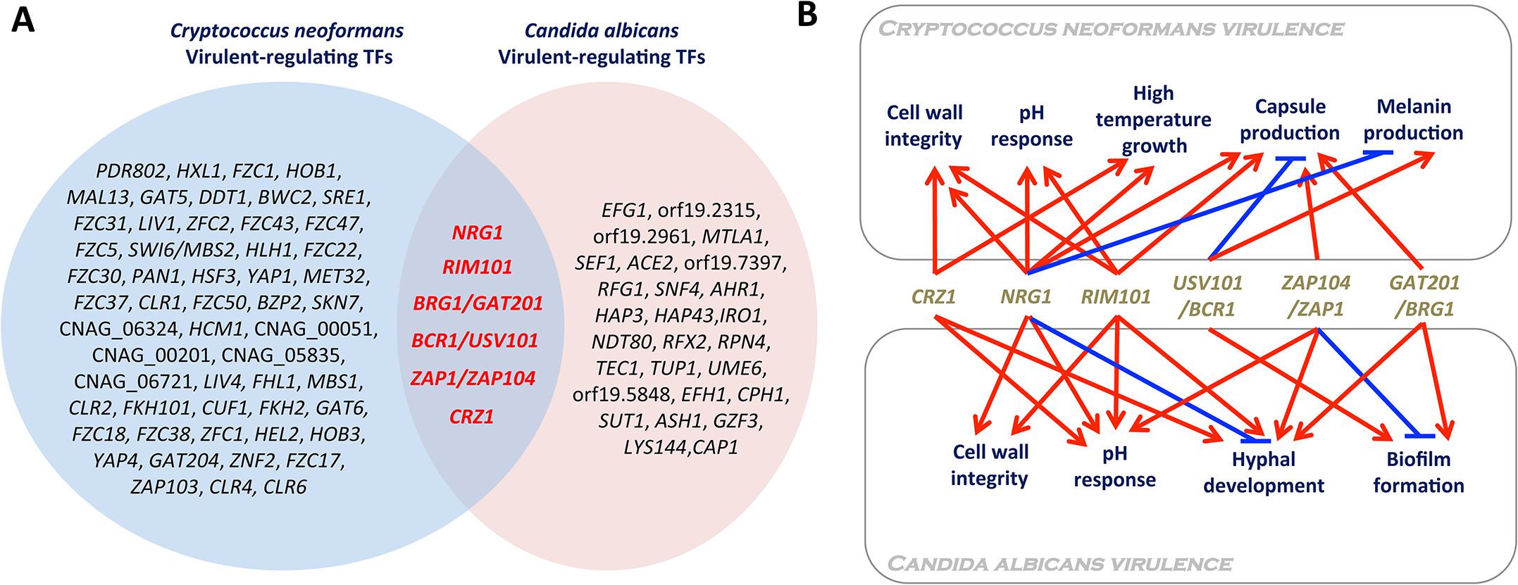 Virulence-regulating transcription factors in <i>Candida albicans</i> and <i>Cryptococcus neoformans</i>.