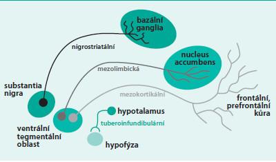 Schéma 7. Schematické zobrazení dopaminergních drah v mozku