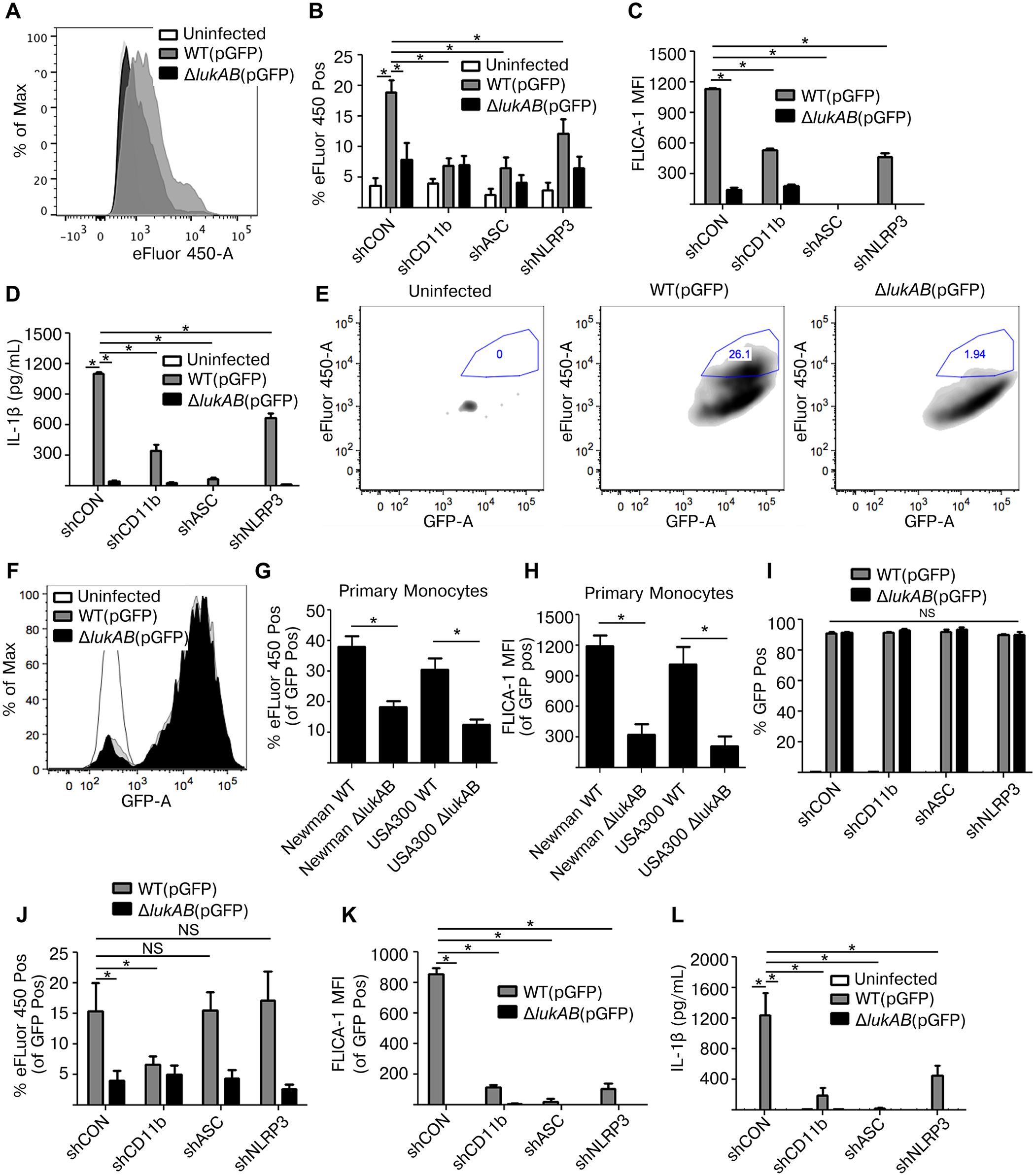 LukAB produced by extracellular or phagocytized <i>S</i>. <i>aureus</i> kills human monocytes.