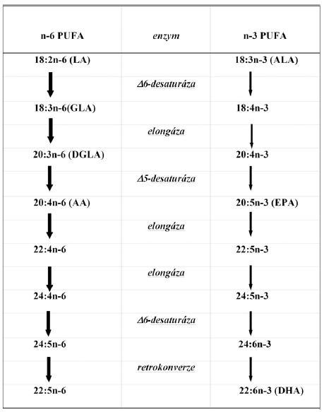Schéma 1. Metabolismus vícenenasycených mastných kyselin (PUFA)