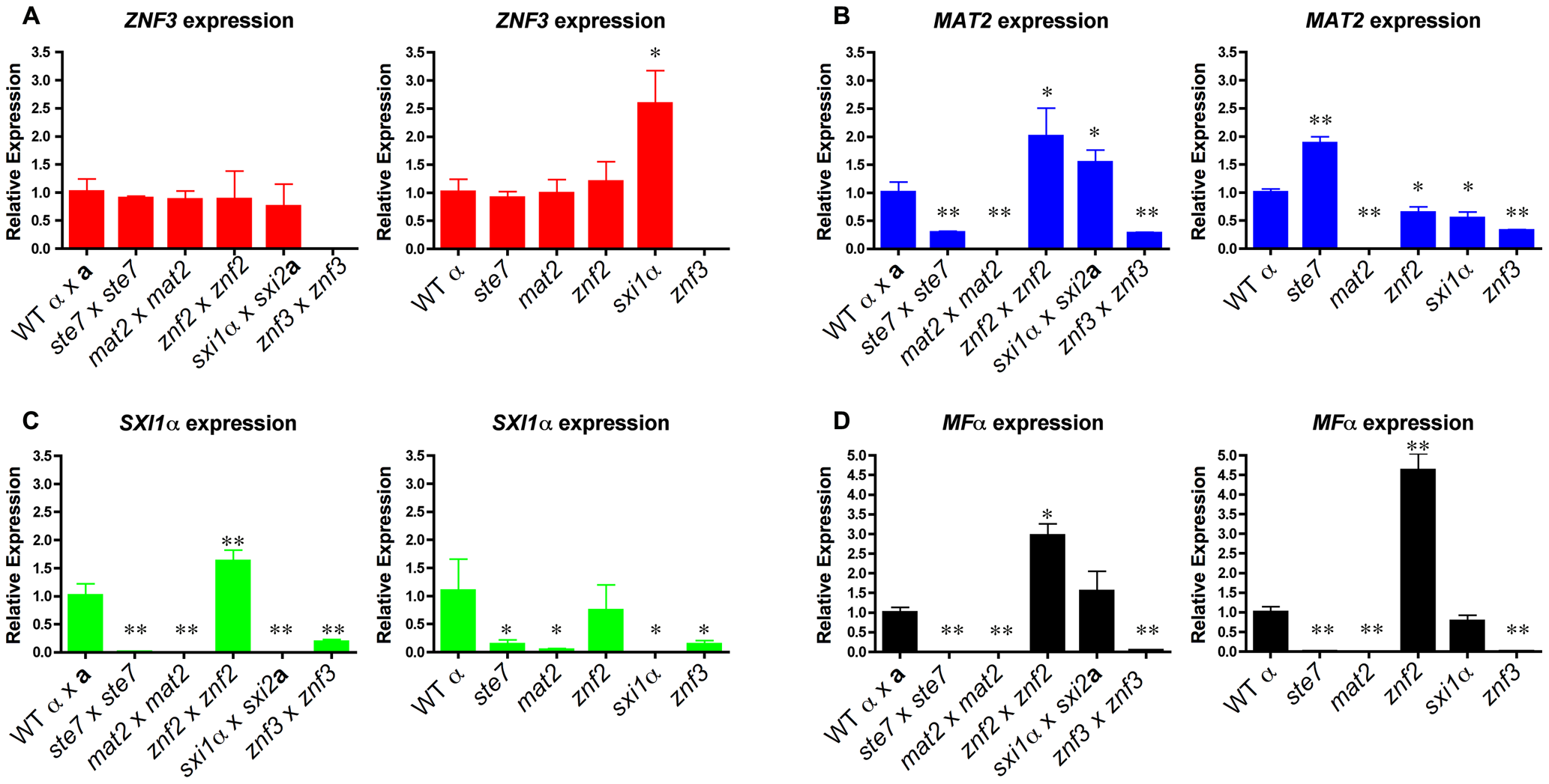 Znf3 regulates the expression of Mat2 and promotes pheromone production.