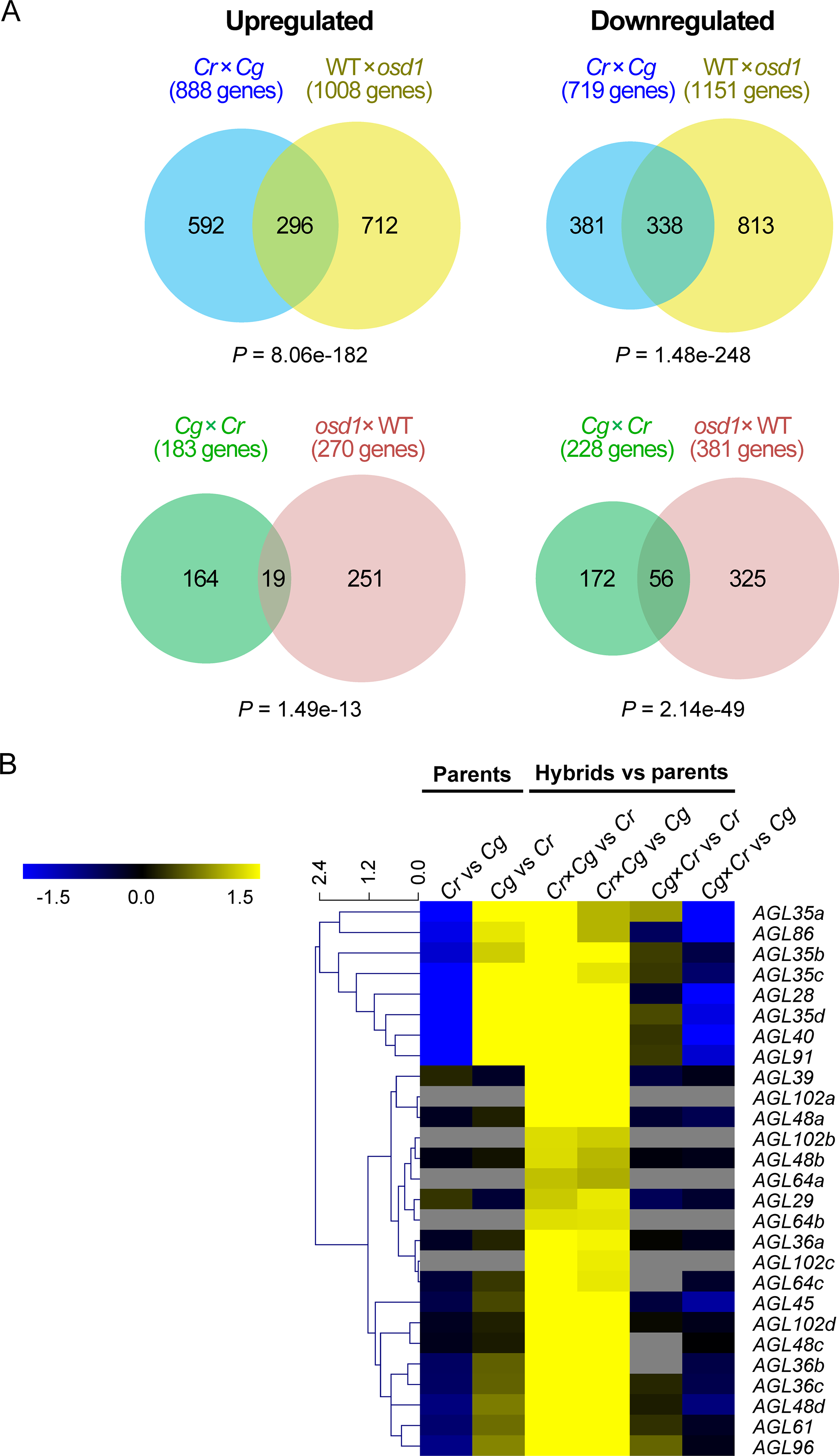 Molecular response to reciprocal hybridizations of <i>C</i>. <i>rubella</i> × <i>C</i>. <i>grandiflora</i> is similar to interploidy hybridizations in Arabidopsis.