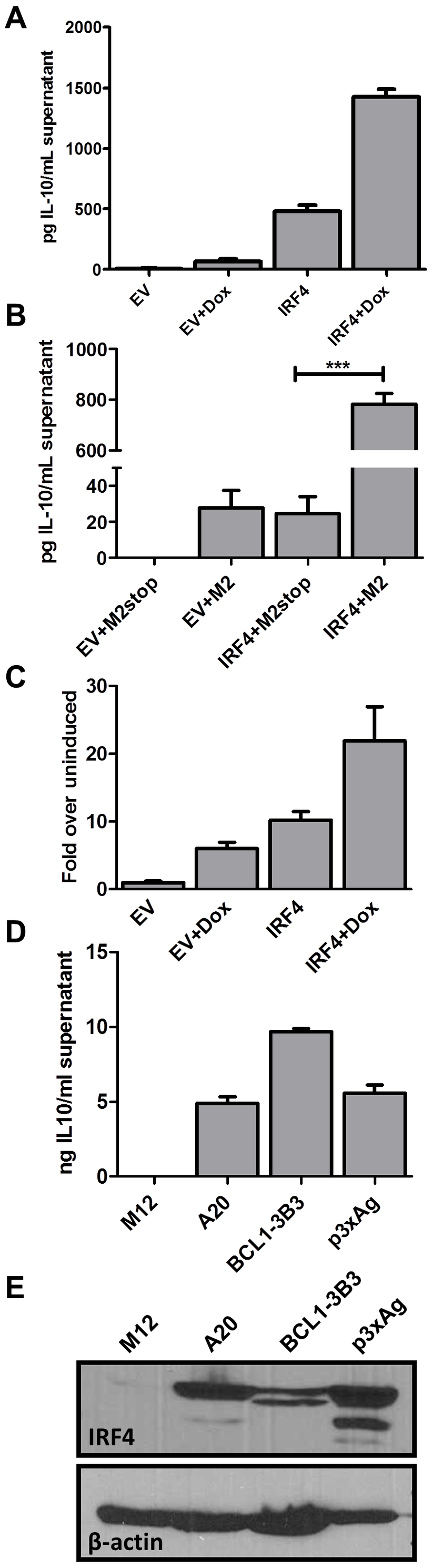 IRF4 expression in B cells leads to IL-10 secretion and M2 synergizes with IRF4 to enhance IL-10 levels.