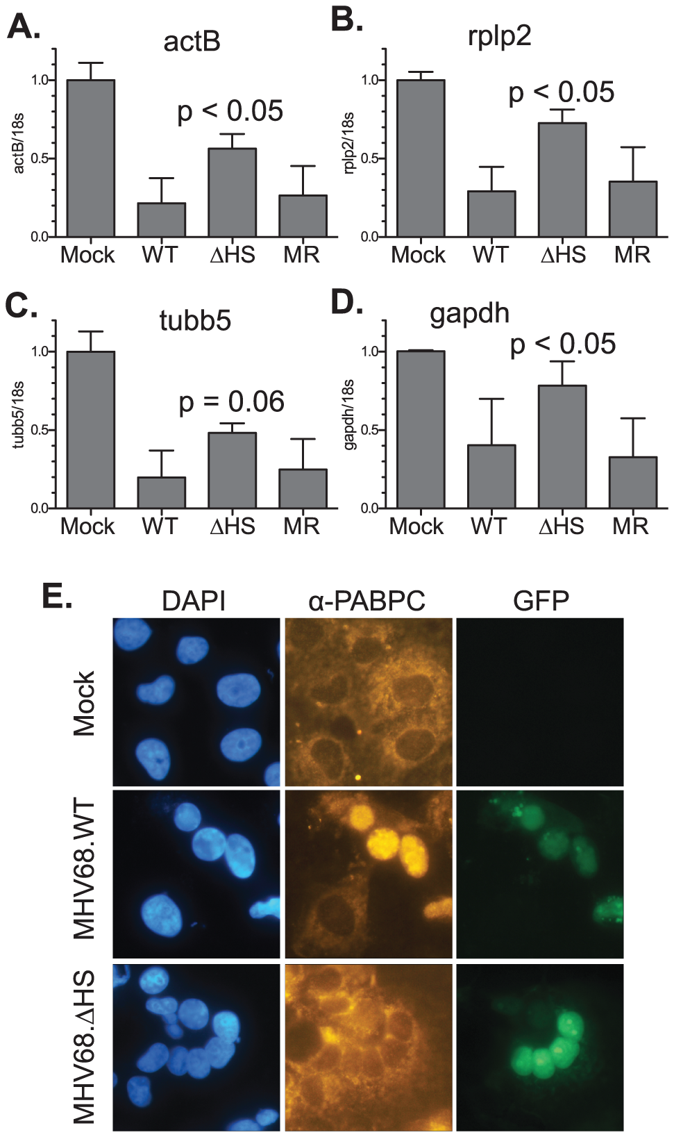 MHV68.ΔHS is defective for host shutoff.