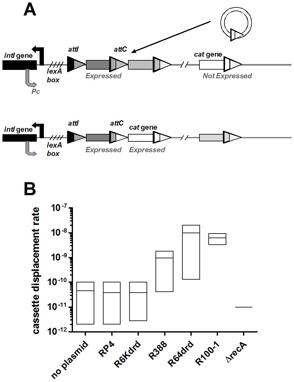 Conjugation triggers IntIA-dependent cassette recombination in <i>V.cholerae</i> superintegron.