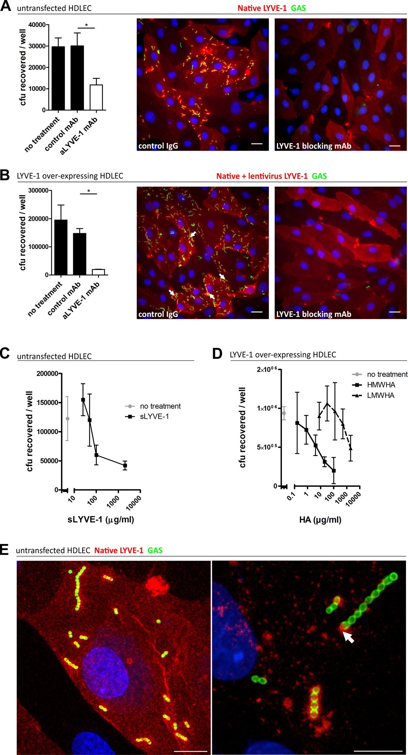 Human LYVE-1 mediates GAS adhesion to HDLEC <i>via</i> capsular HA.
