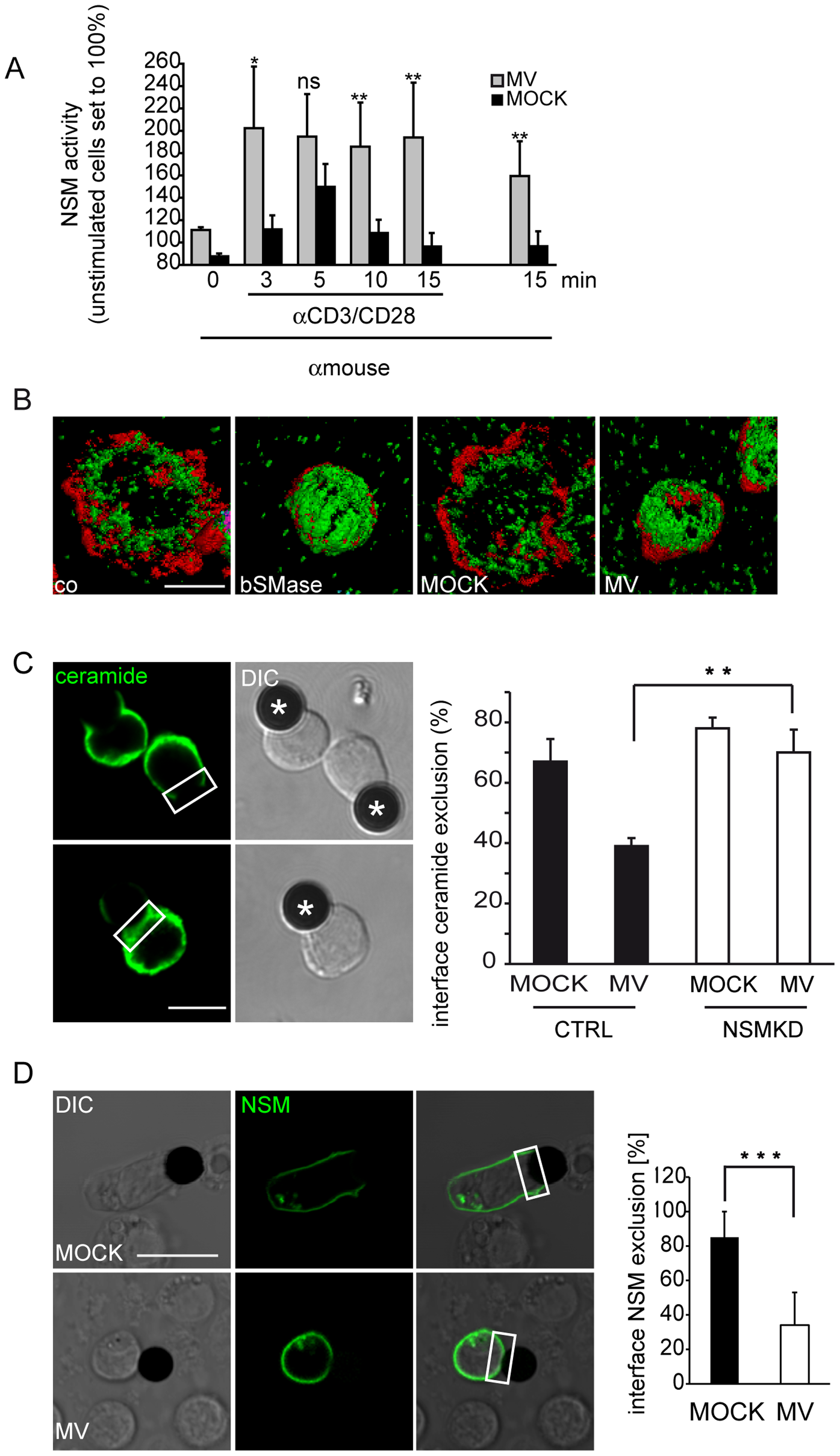 MV causes early superactivation of NSM and ceramide accumulation within stimulatory interfaces.