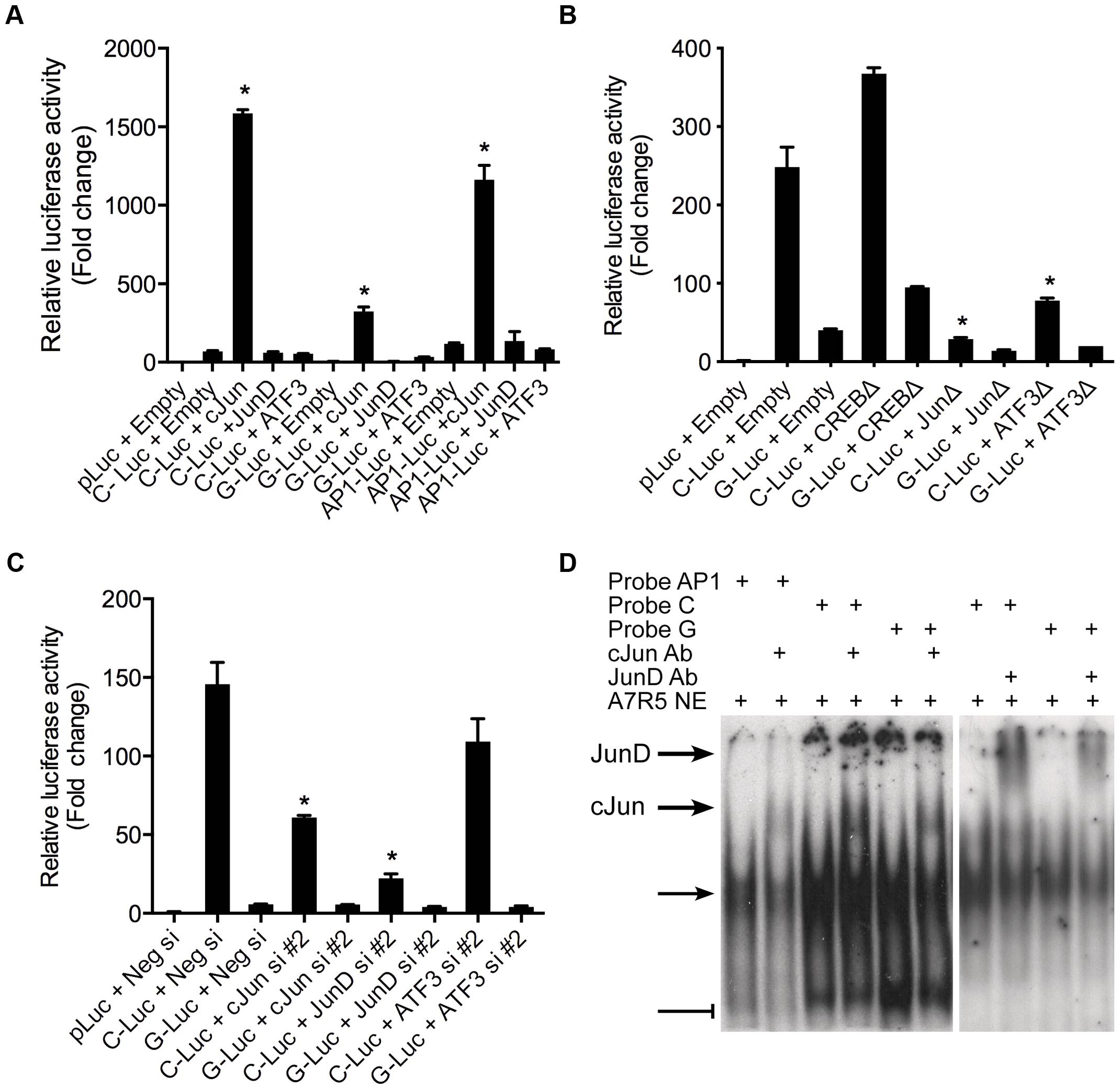 AP-1 dependent transcriptional regulation at rs12190287 <i>in vitro</i>.