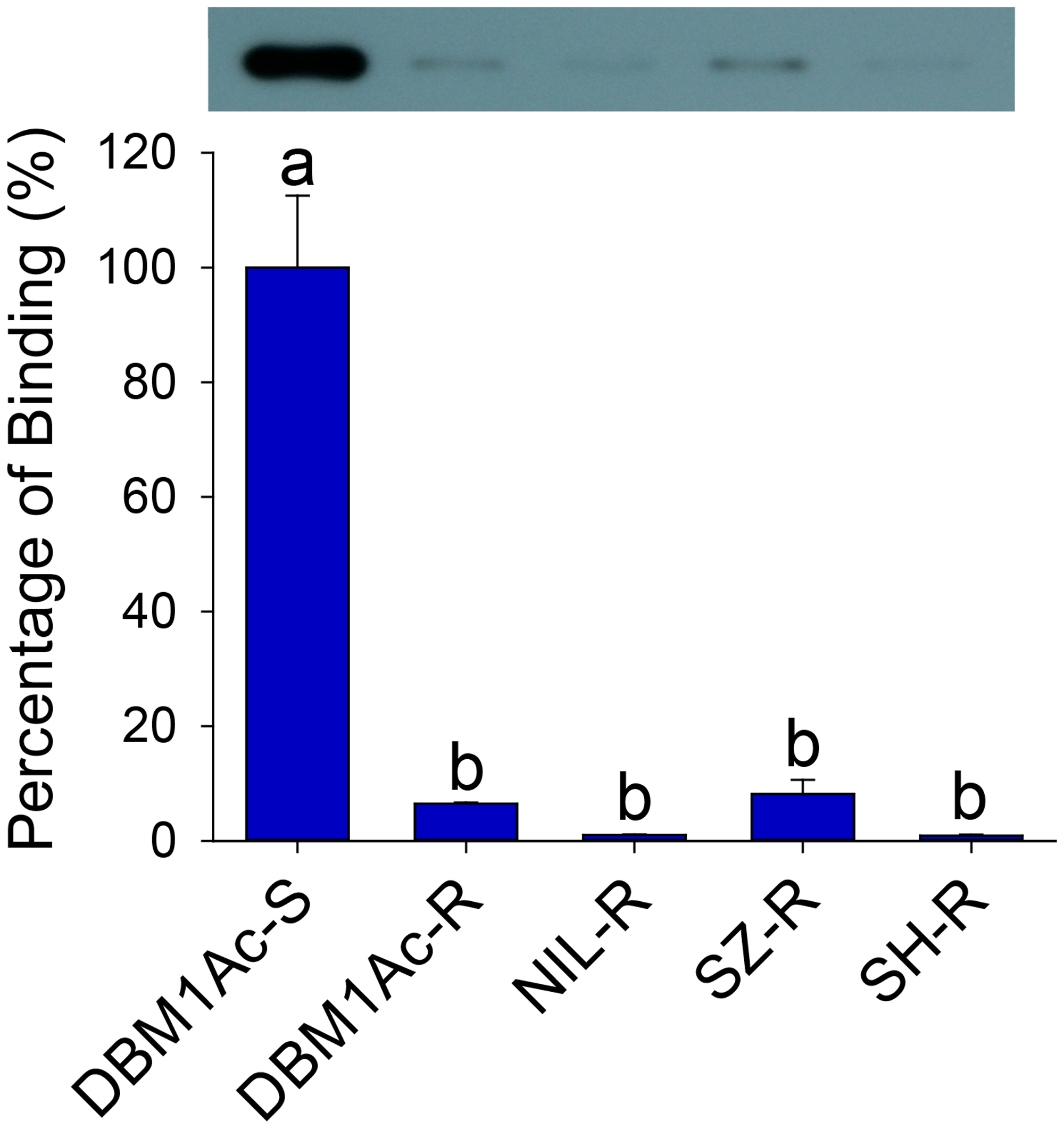 Reduced Cry1Ac binding in BBMV samples of larvae from resistant compared to susceptible <i>P</i>. <i>xylostella</i> strains.