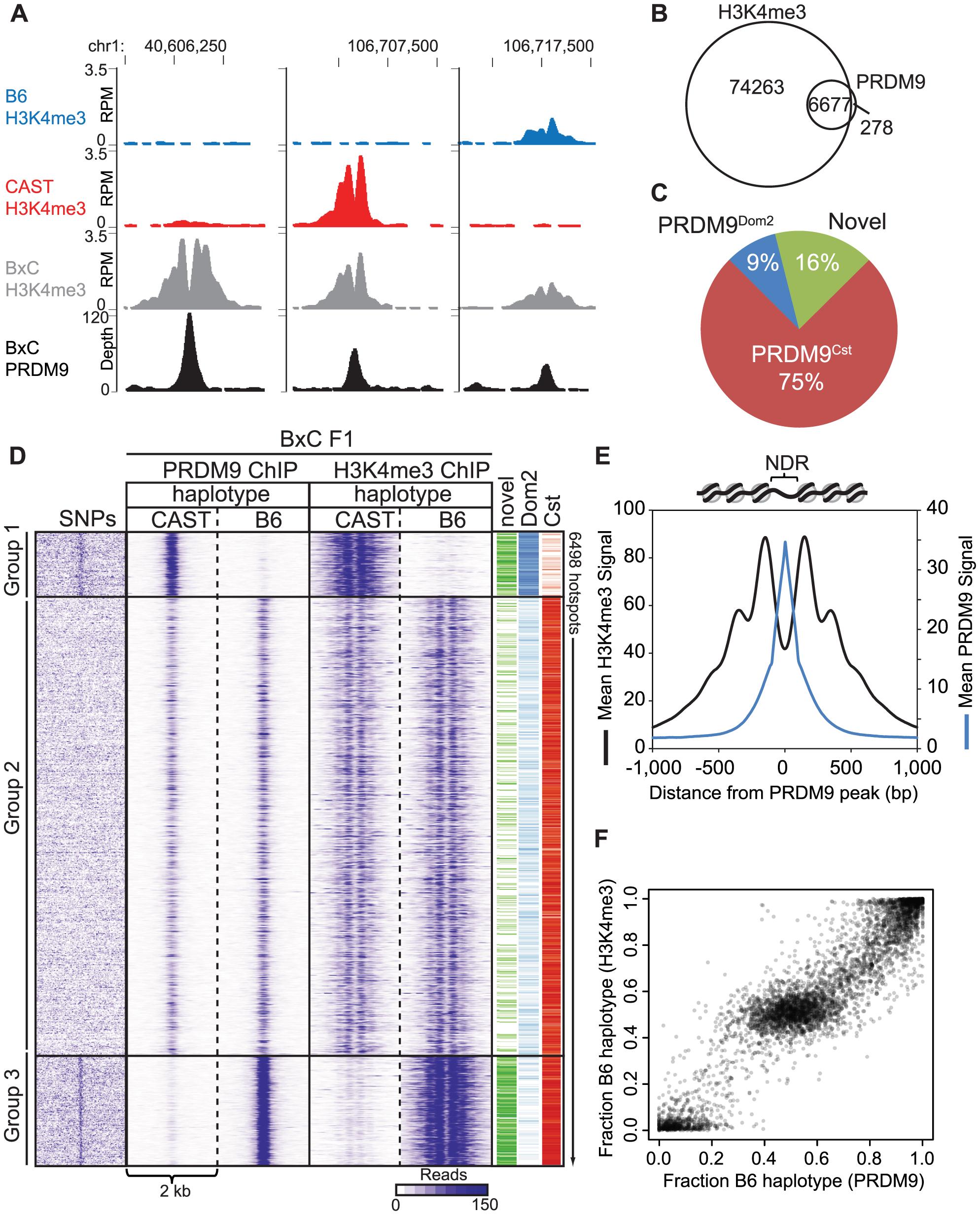 PRDM9 binding shows large haplotype bias in vivo.