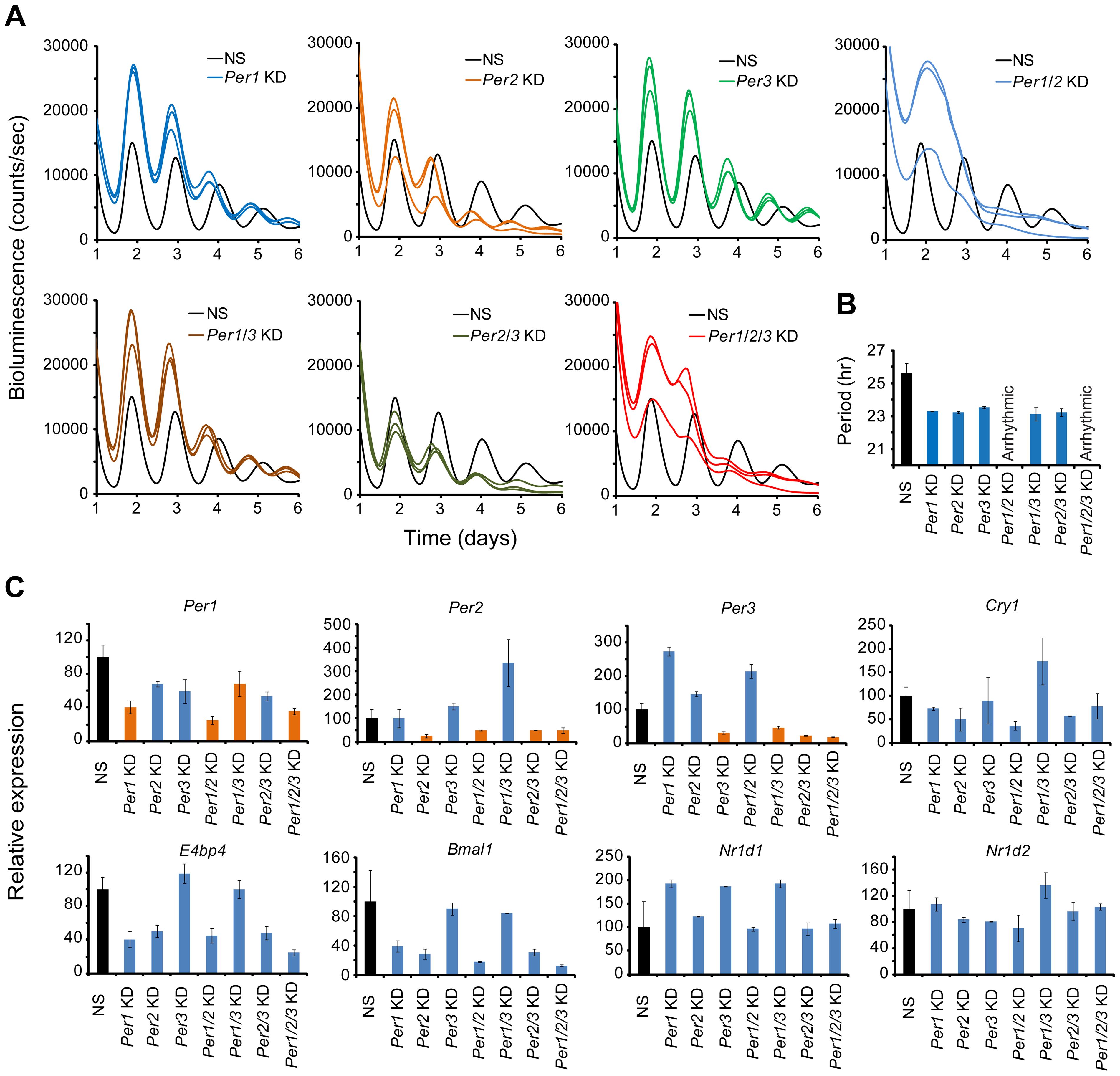 shRNA-mediated single and composite knockdown effects of <i>Per1</i>, <i>Per2</i> and <i>Per3</i> in MMH-D3 hepatocytes.