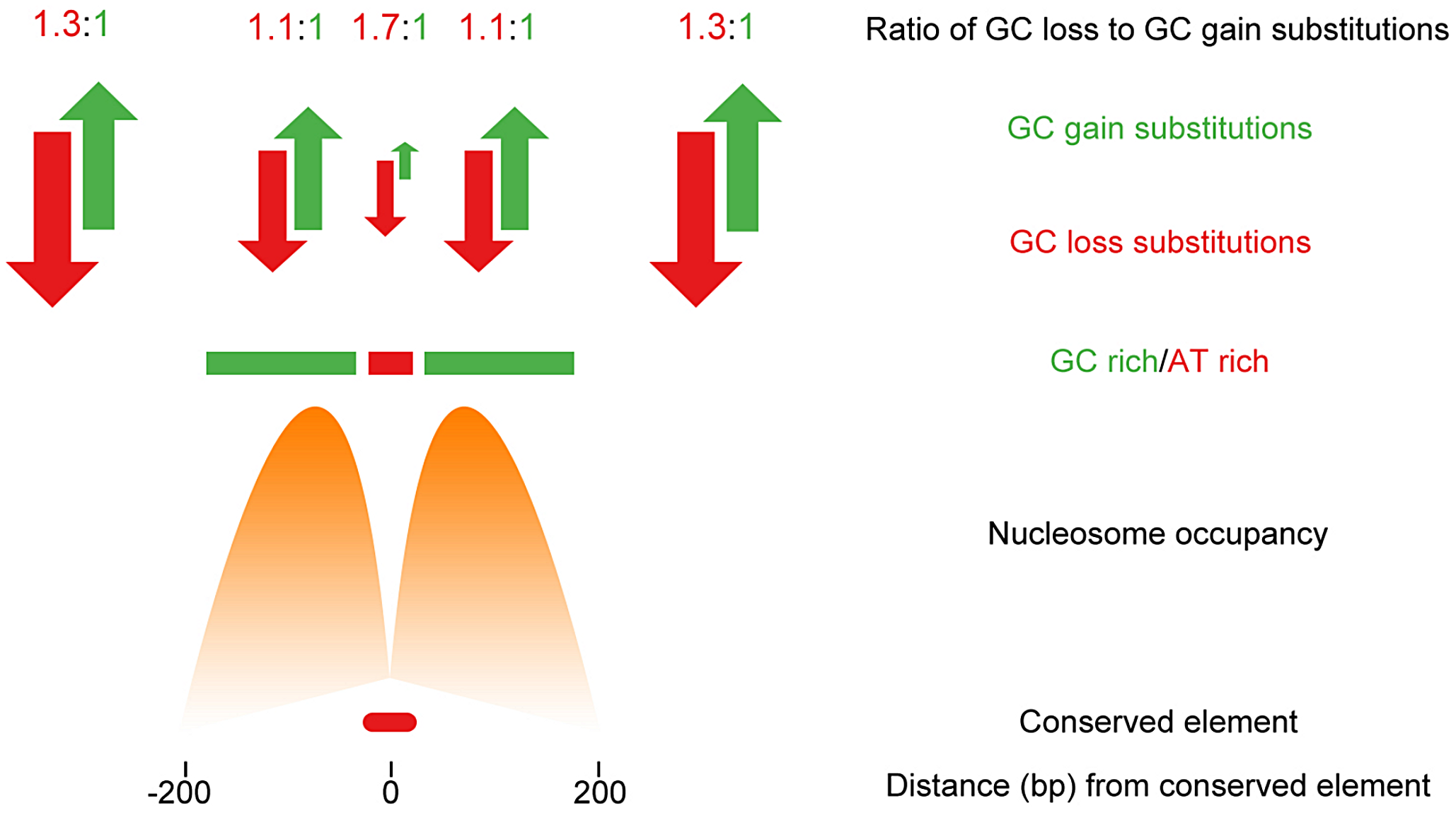 Non-neutral evolution within large regions flanking CNEs in <i>Drosophila</i> acts to maintain sequence composition and favourable nucleosome positioning.