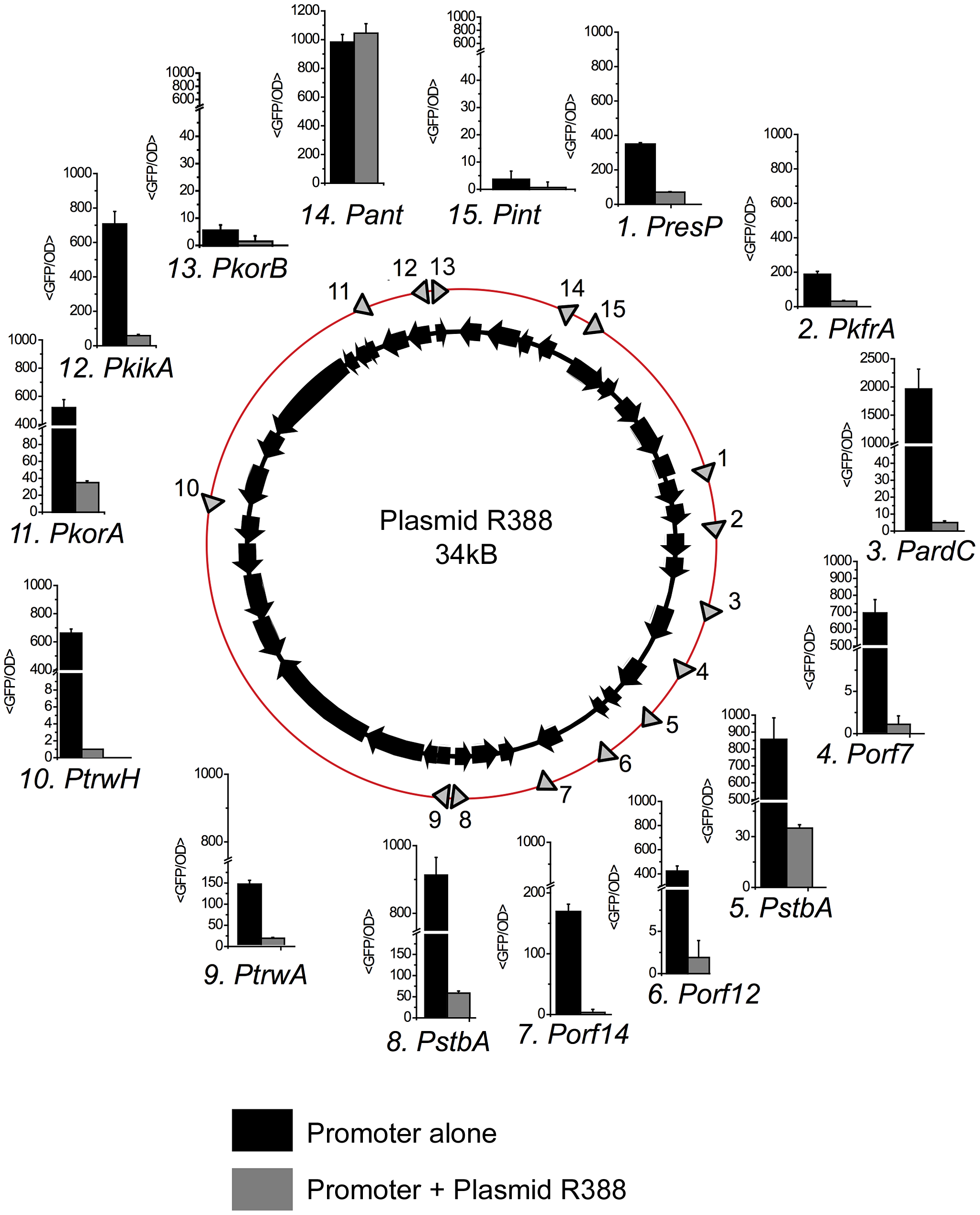 Promoters in plasmid R388.