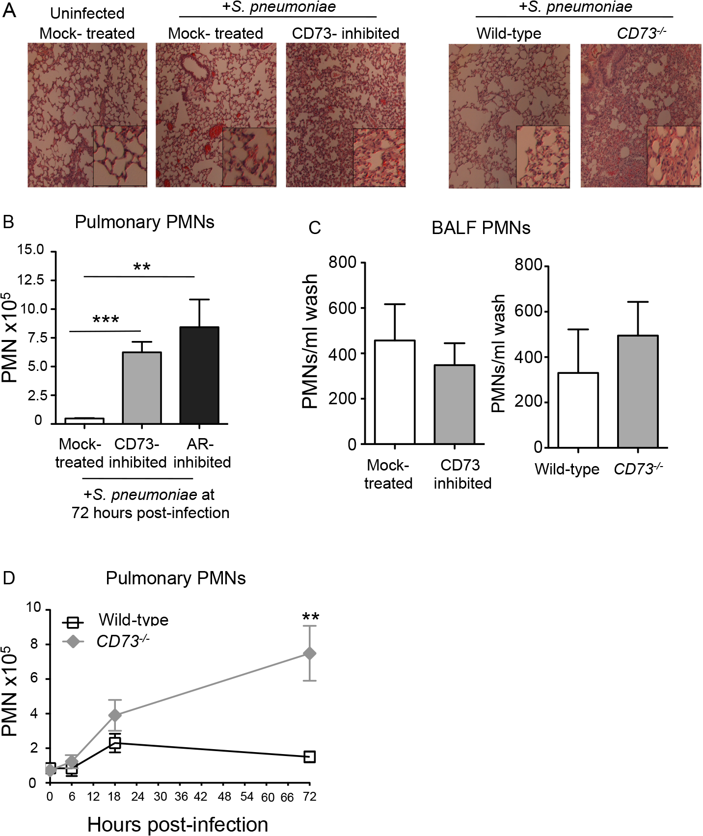 Inhibition of EAD production or signaling significantly increases PMN numbers in the pulmonary tissues.