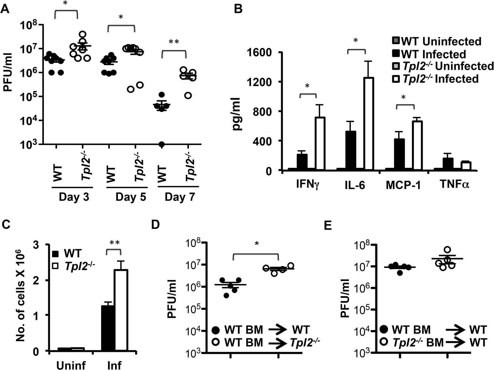 Tpl2 ablation enhances virus replication and inflammatory responses during influenza infection.