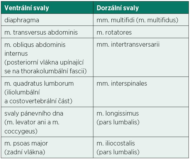 Svaly zajišťující rovnováhu bederní páteře působením z ventrální a dorzální strany. Ventrální skupina svalů vytváří nitrobřišní tlak, který se přenáší na bederní páteř zepředu. Dorzální svaly vytvářejí jejich antagonisty (22).