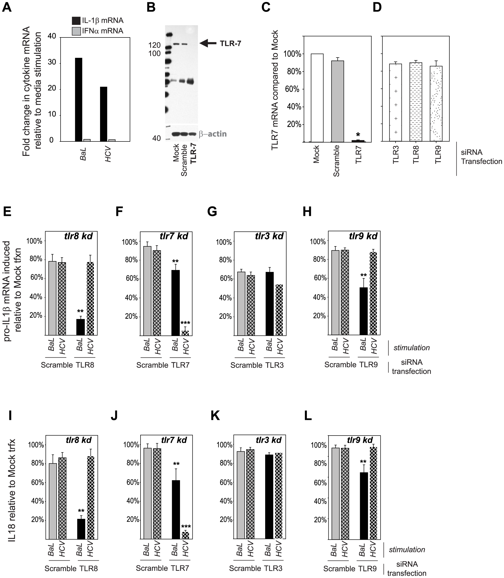Differential importance of endosomal TLRs in inflammasome sensing of HIV and HCV.