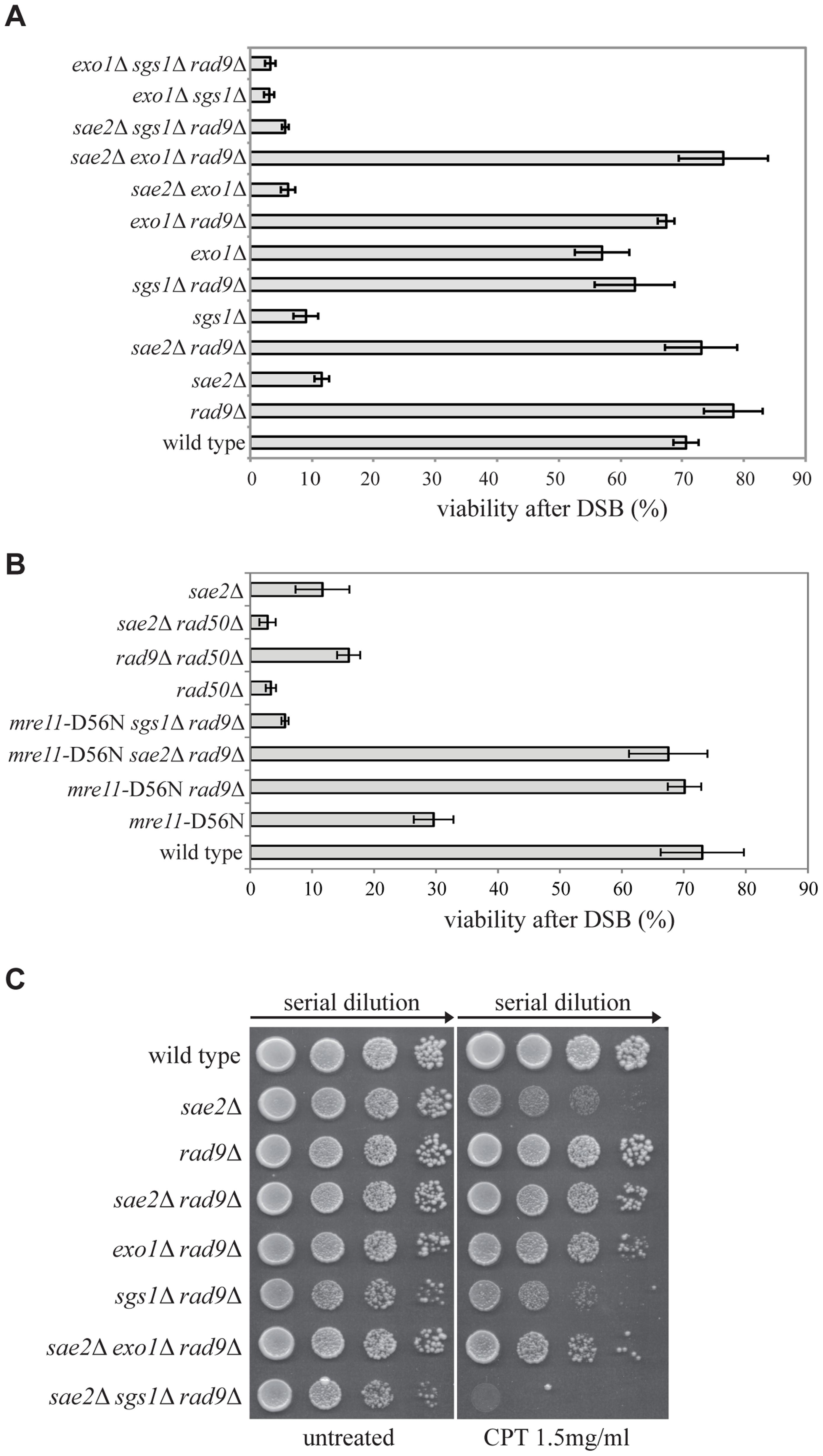 Deletion of <i>RAD9</i> rescues <i>sae2</i>Δ and <i>mre11</i>-D56N cell viability following DSBs through <i>SGS1</i>.