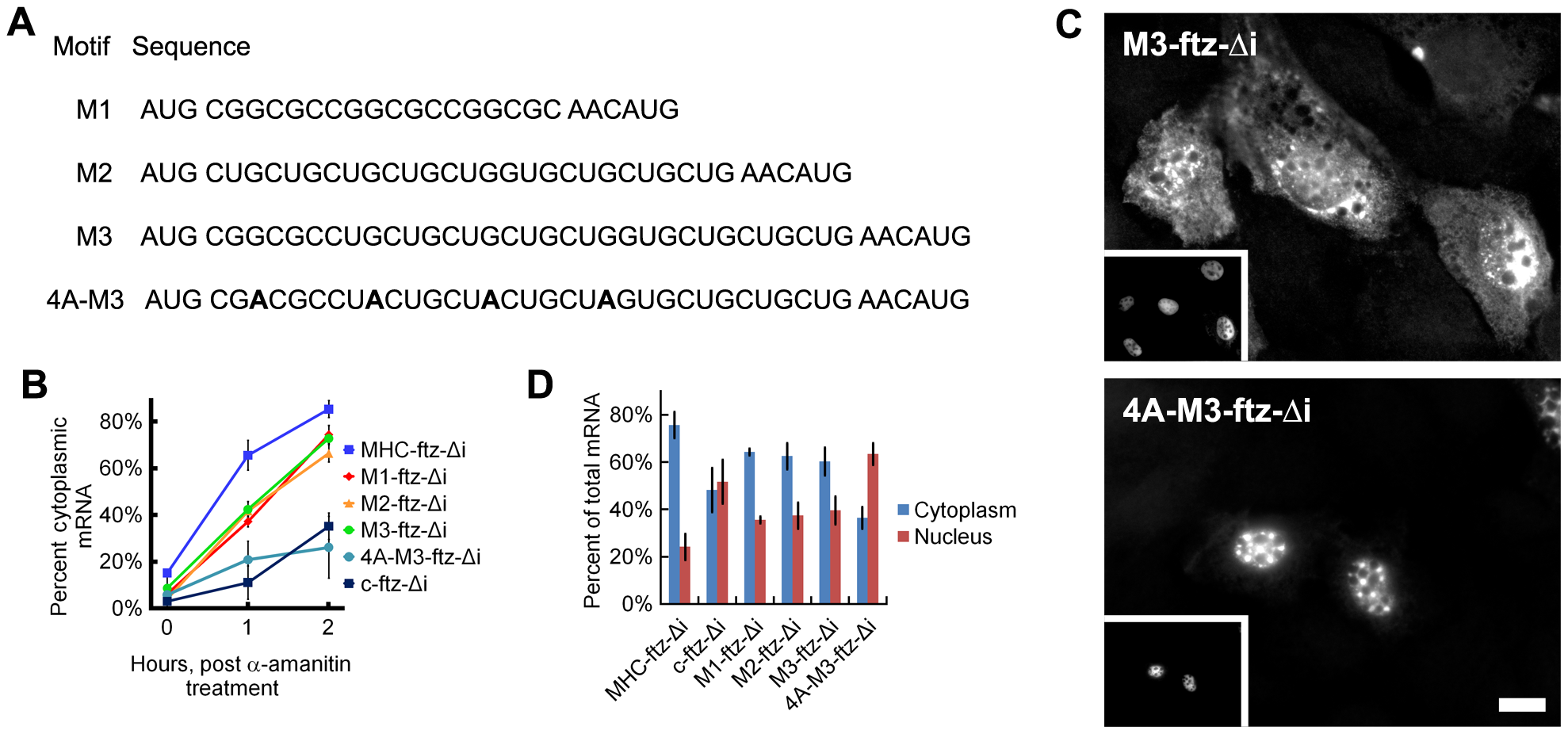 ALREX–associated motifs promote nuclear export of mRNA.