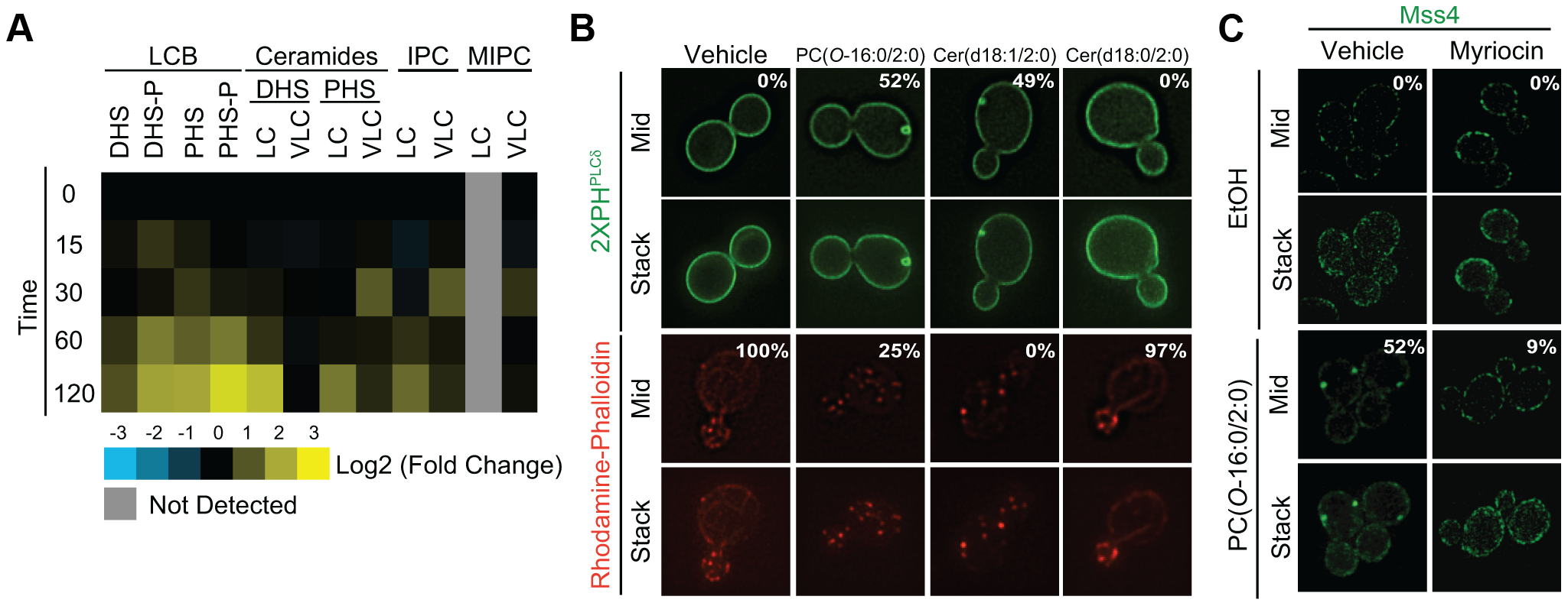 PC(<i>O</i>-16:0/2:0) disrupts sphingolipid metabolism leading to changes in Mss4-GFP localization.