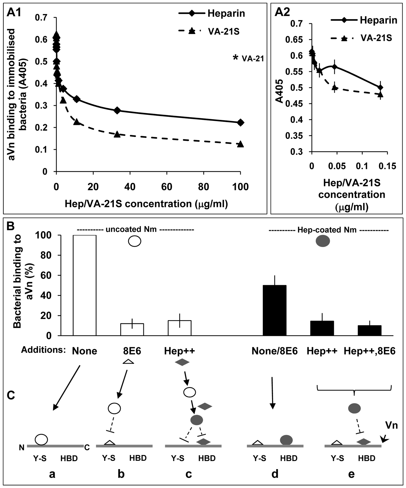 Biphasic effect of heparin on bacterial interactions with human vitronectin.