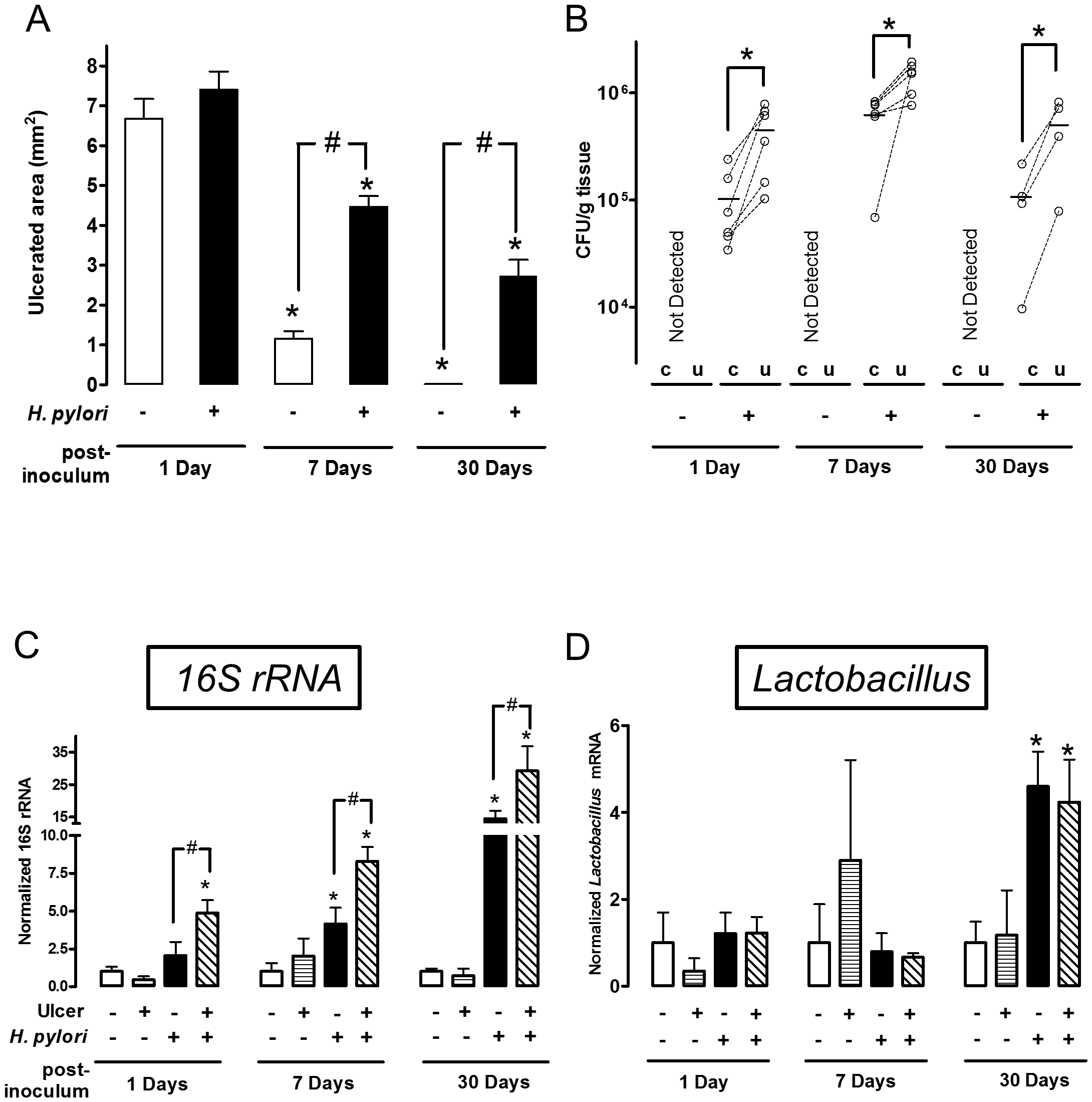 Time course of bacterial colonization and <i>H. pylori</i> effects on gastric ulcer healing.