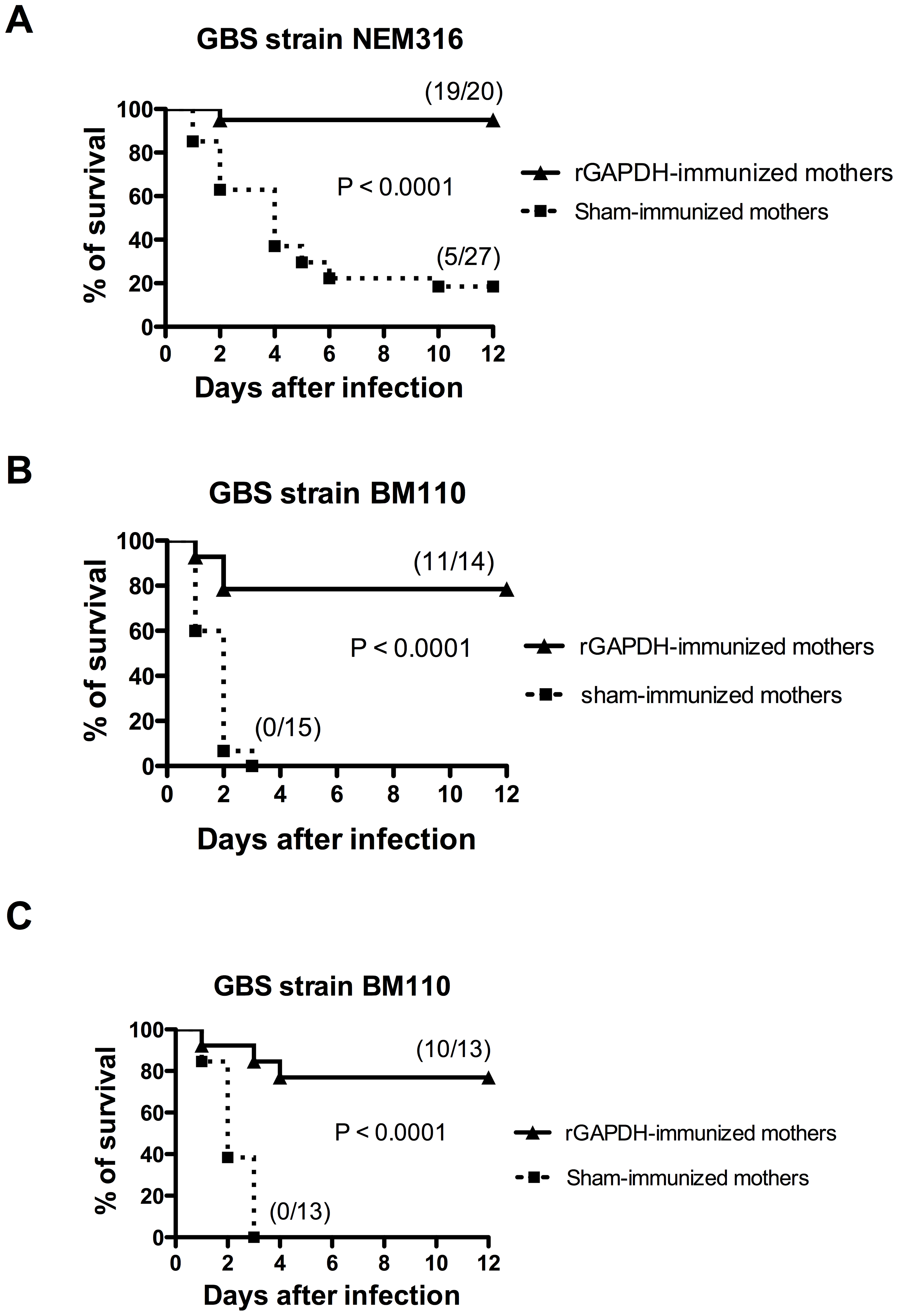 Maternal immunization with rGAPDH protects newborn mice from GBS-induced death.
