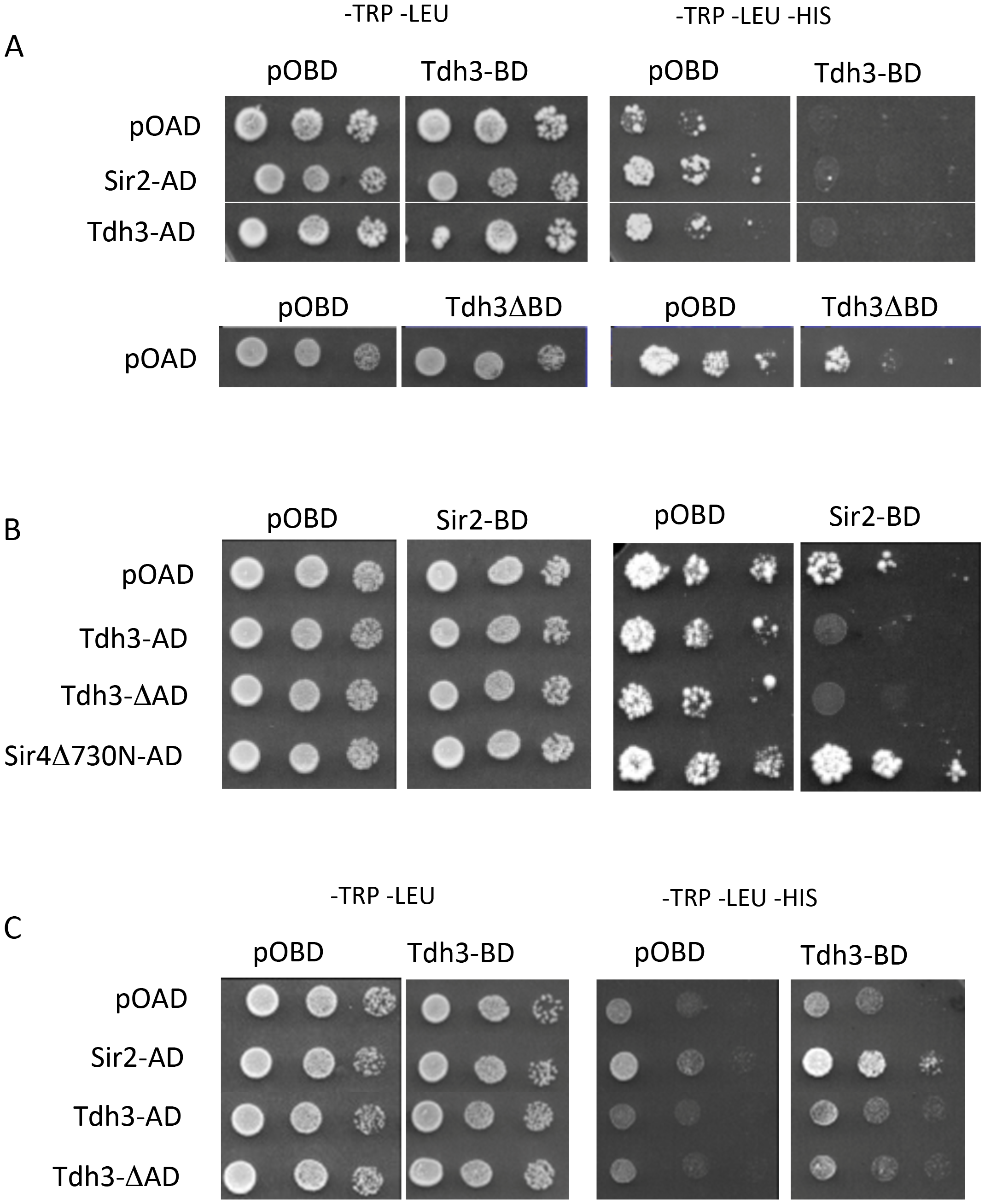 Physical and functional interaction between Tdh3 and Sir2 in a two-hybrid assay.
