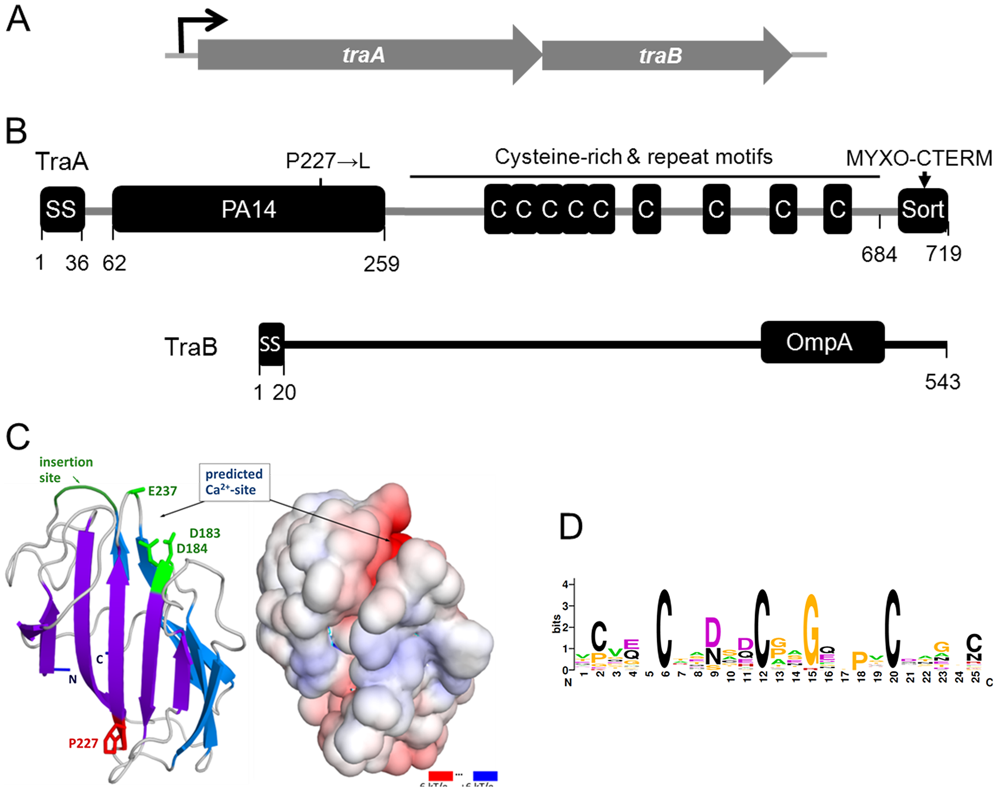 Genetic and modular structure of TraAB.