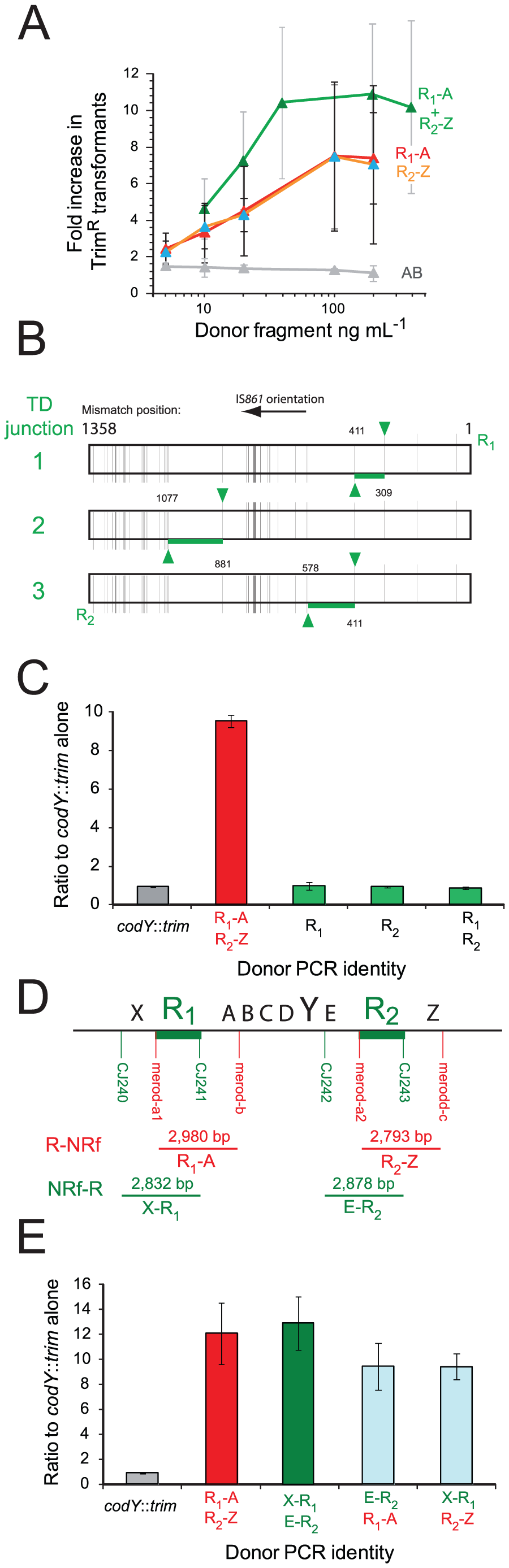 R-NRf donor fragments promote merodiploid formation, allowing survival of otherwise lethal <i>codY</i>::<i>trim</i> transformants.