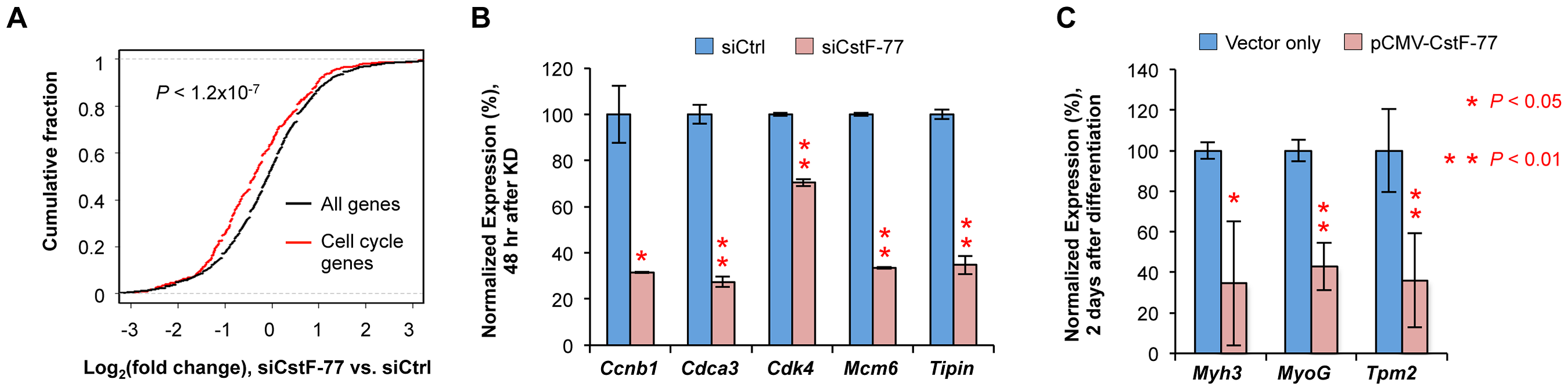 Cell cycle genes are affected by CstF-77 knockdown.