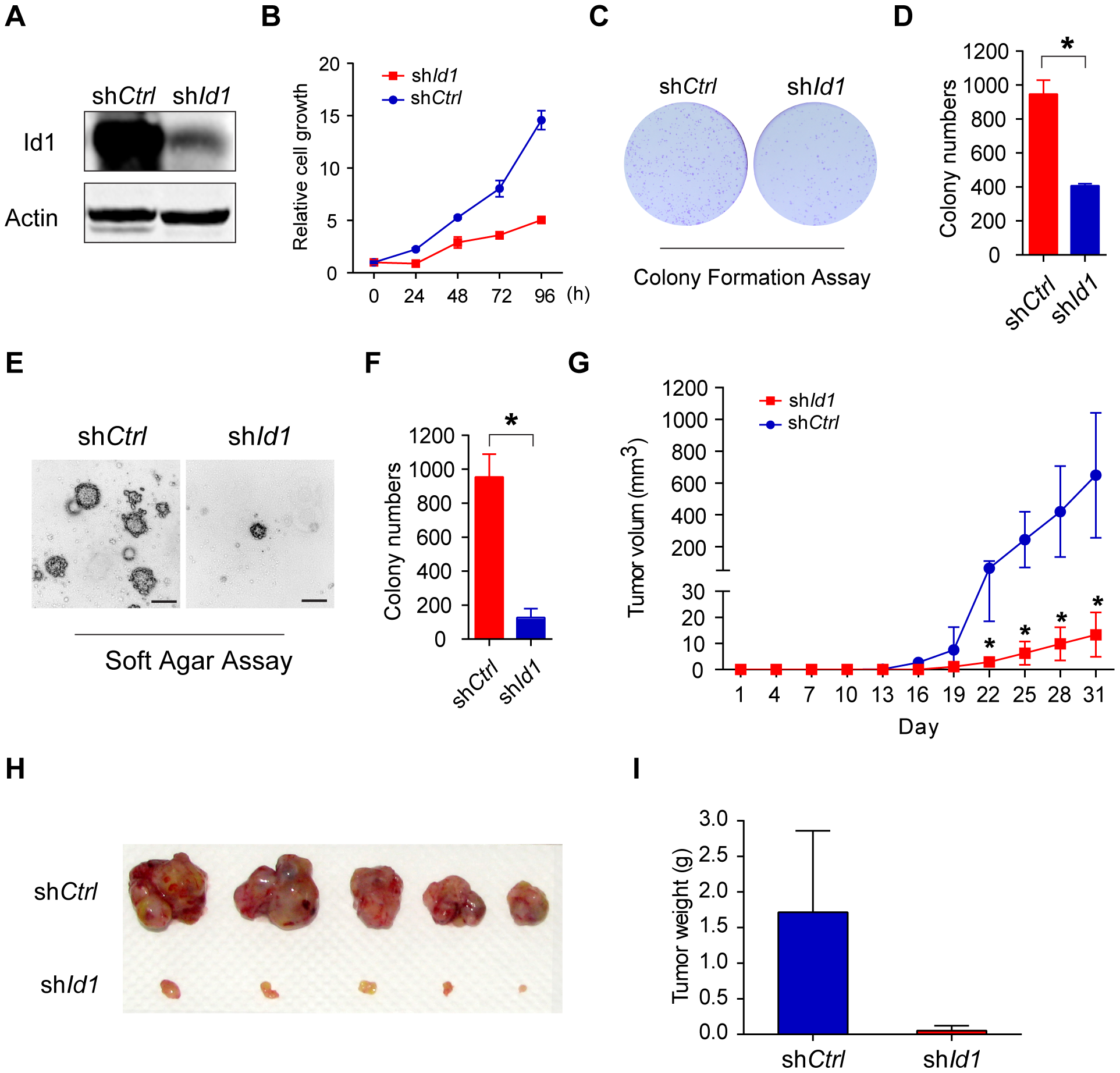Knockdown of Id1 dramatically inhibited the tumorigenicity of KMM cells.