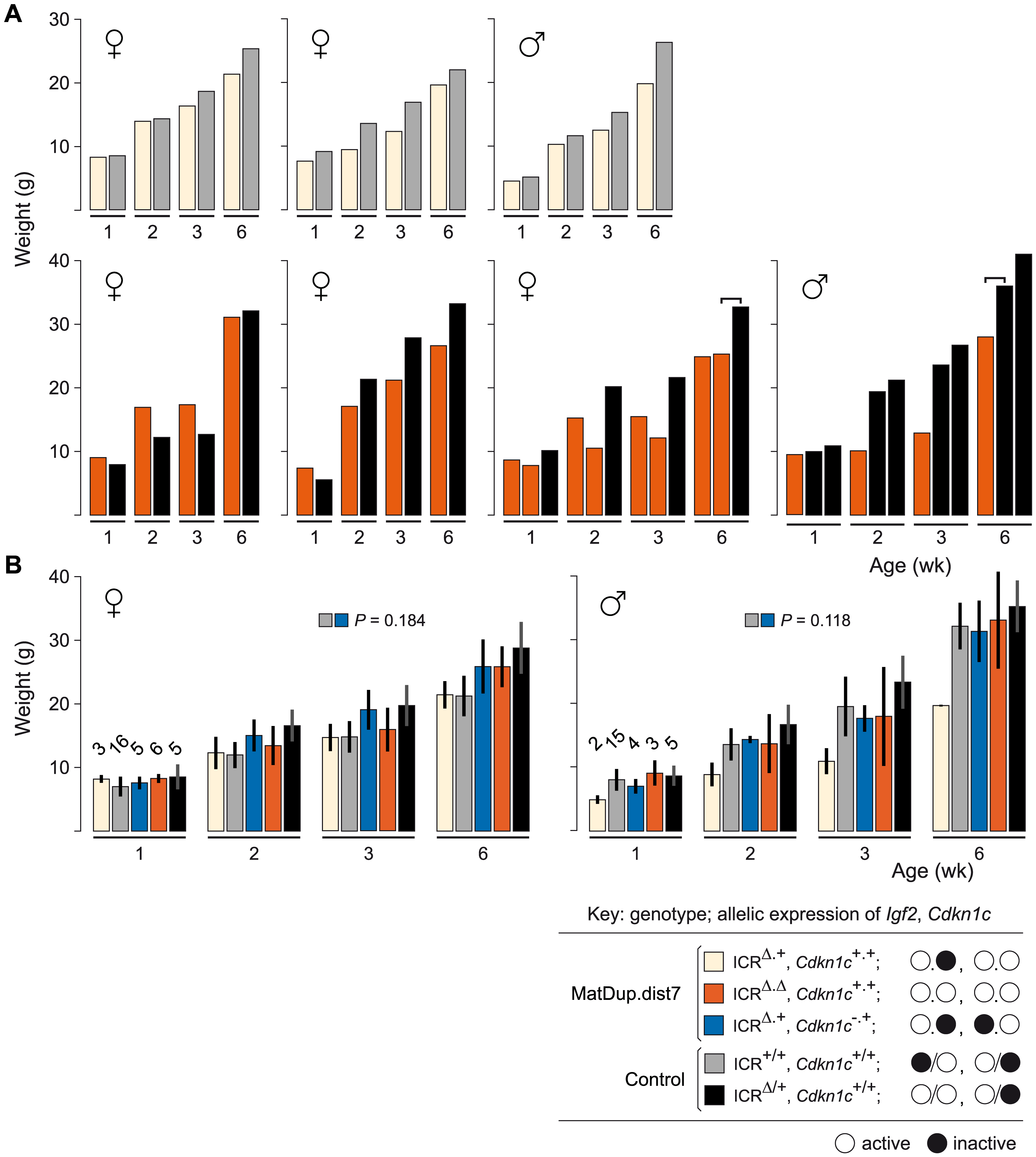 Weight gain in post-partum MatDup.dist7 mice rescued by ICR<sup>Δ</sup>.