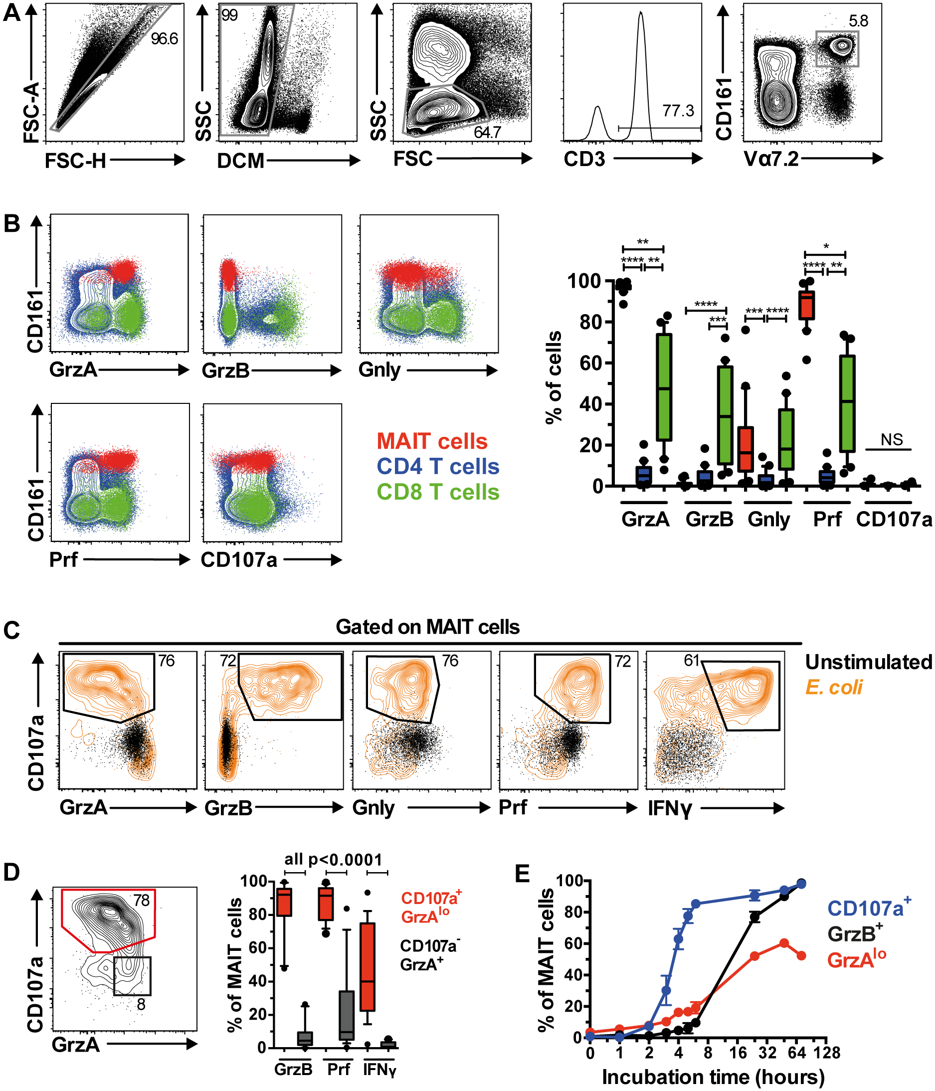 MAIT cells are rapidly armed into full effector T cells following bacterial stimulation.