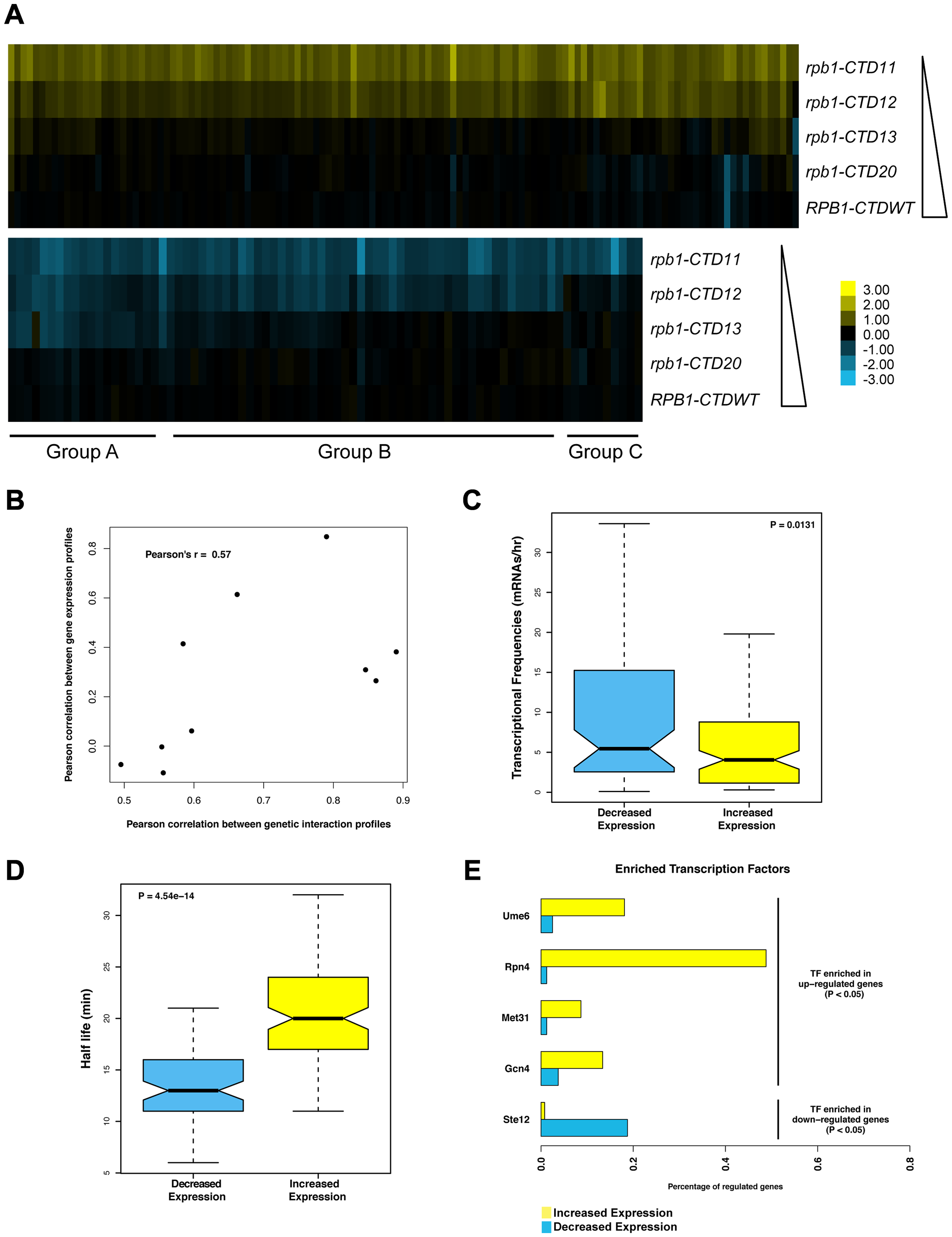 Serial CTD truncations led to progressive steady state transcriptional defects.