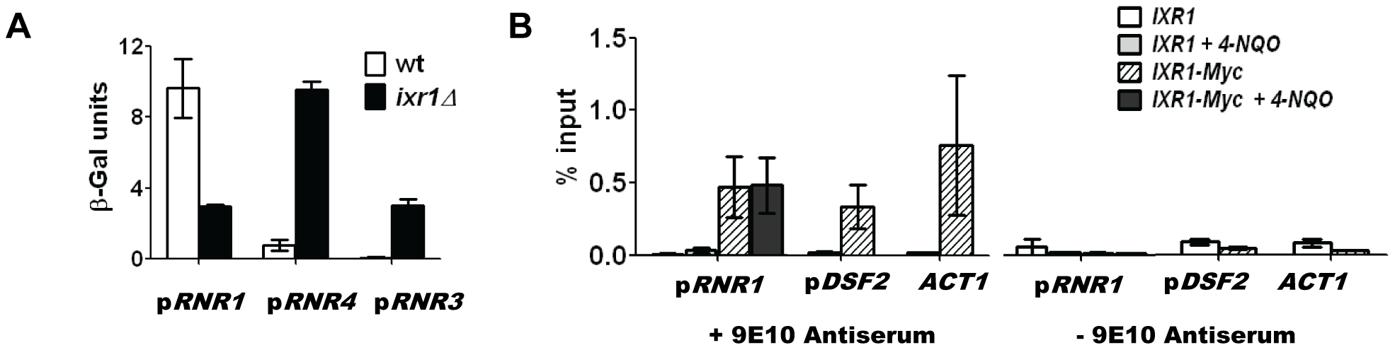 Ixr1 regulates <i>RNR1</i> promoter activity.