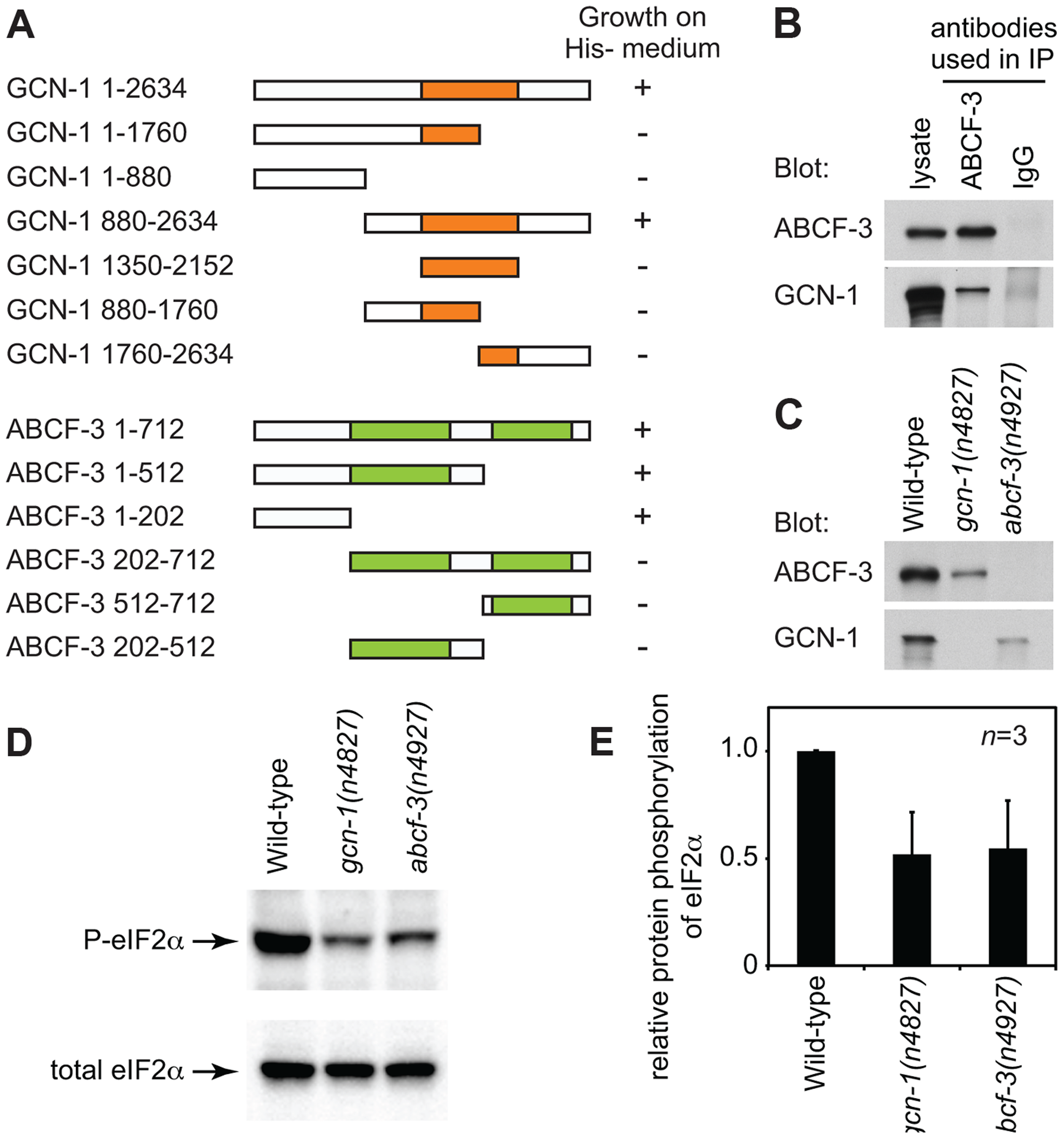 GCN-1 and ABCF-3 proteins are evolutionarily conserved functionally.