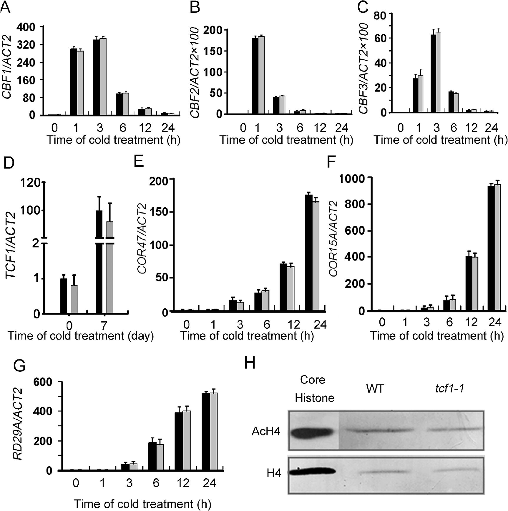 Gene expression analyses of the CBFs and the CBF regulon in the <i>tcf1-1</i> and wild-type plants.