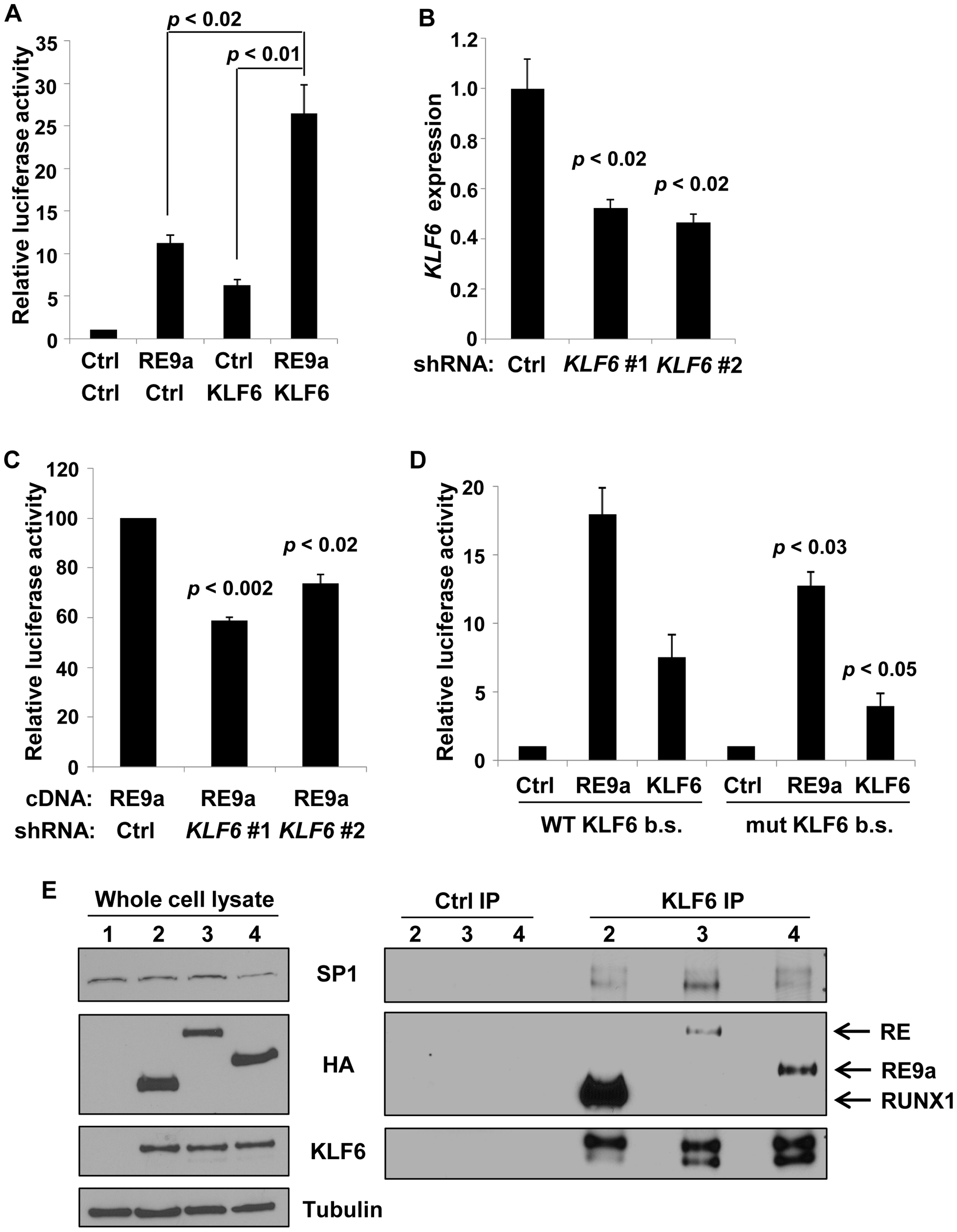 <i>Alox5</i> regulation by RE9a and KLF6.