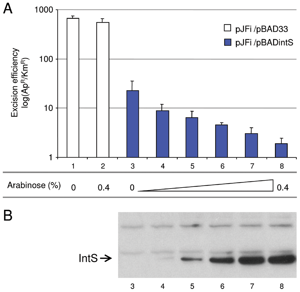 <i>In vivo</i> effect of IntS overexpression on the excision of KplE1 prophage DNA.