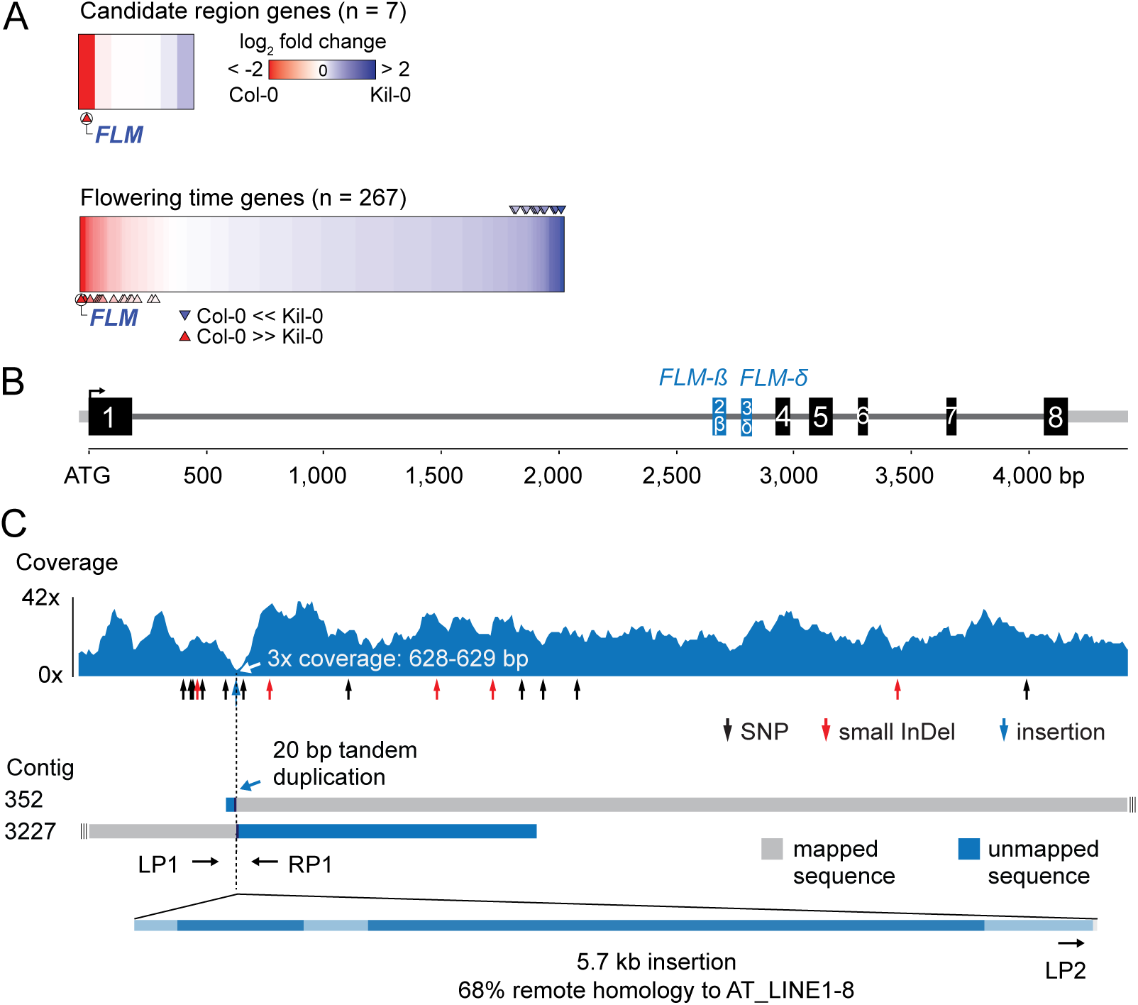 Identification of the Kil-0 early flowering locus.