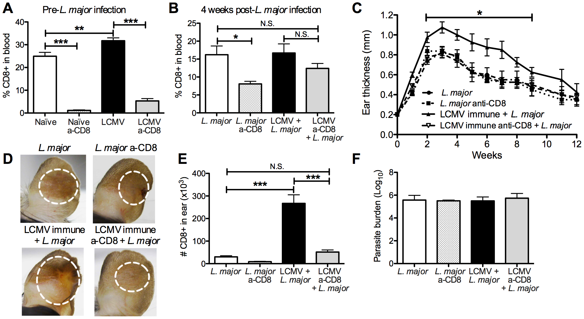 Exacerbated immunopathology is lost following depletion of CD8 T cells in LCMV immune mice prior to <i>L. major</i> infection.