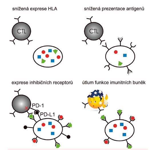 Schematické znázornění vybraných mechanismů, kterými nádorové buňky unikají před zásahem imunitního systému