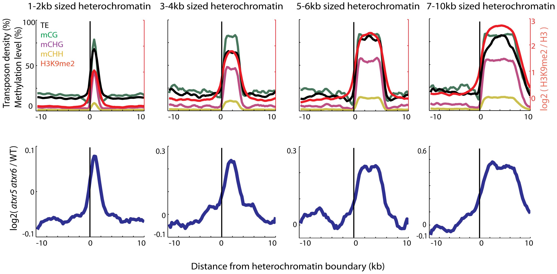 Heterochromatin is specifically re-replicated in <i>atxr5 atxr6</i> double mutants.