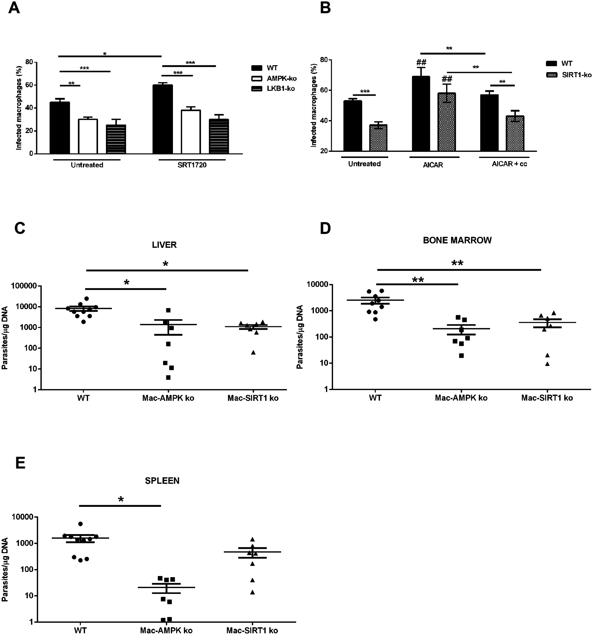 Inhibition of host AMPK contributes for <i>L. infantum</i> clearance.